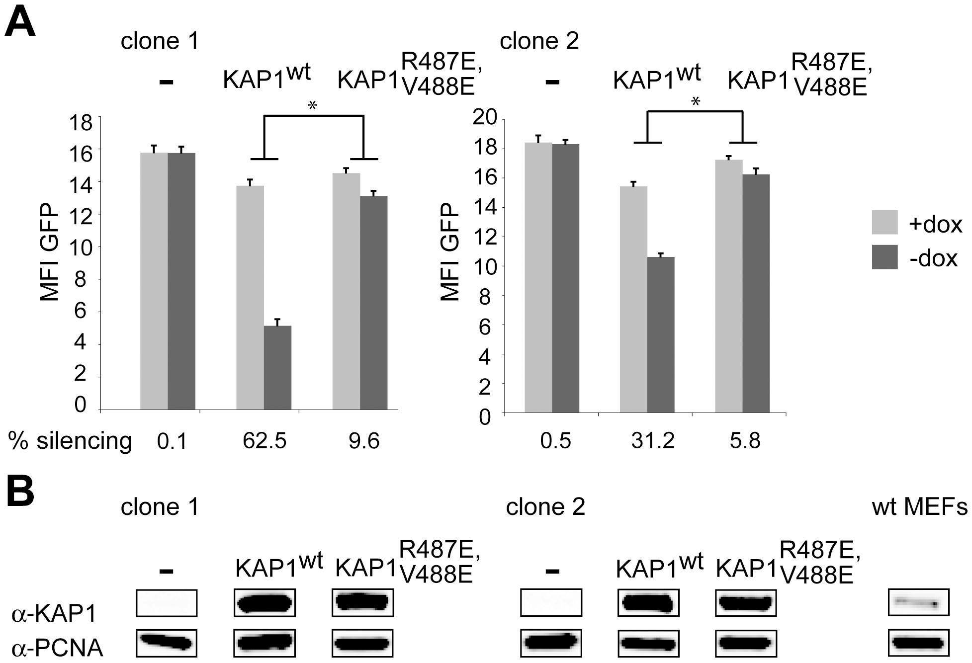 HP1 facilitates KRAB/KAP1–mediated long-range repression.