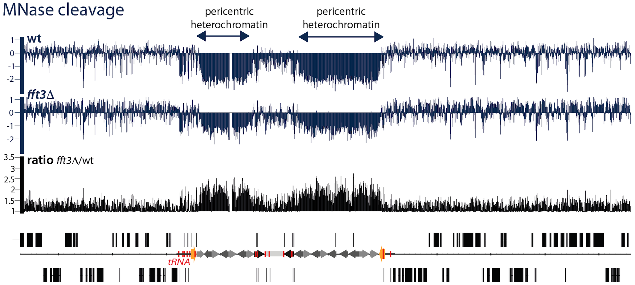 Fft3 is affecting chromatin structure at pericentric heterochromatin.