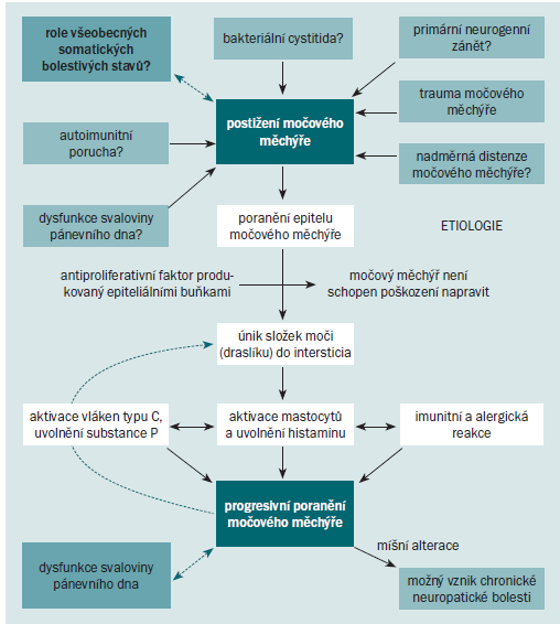 Schéma 3. Teorie etiologie IC/BPS.