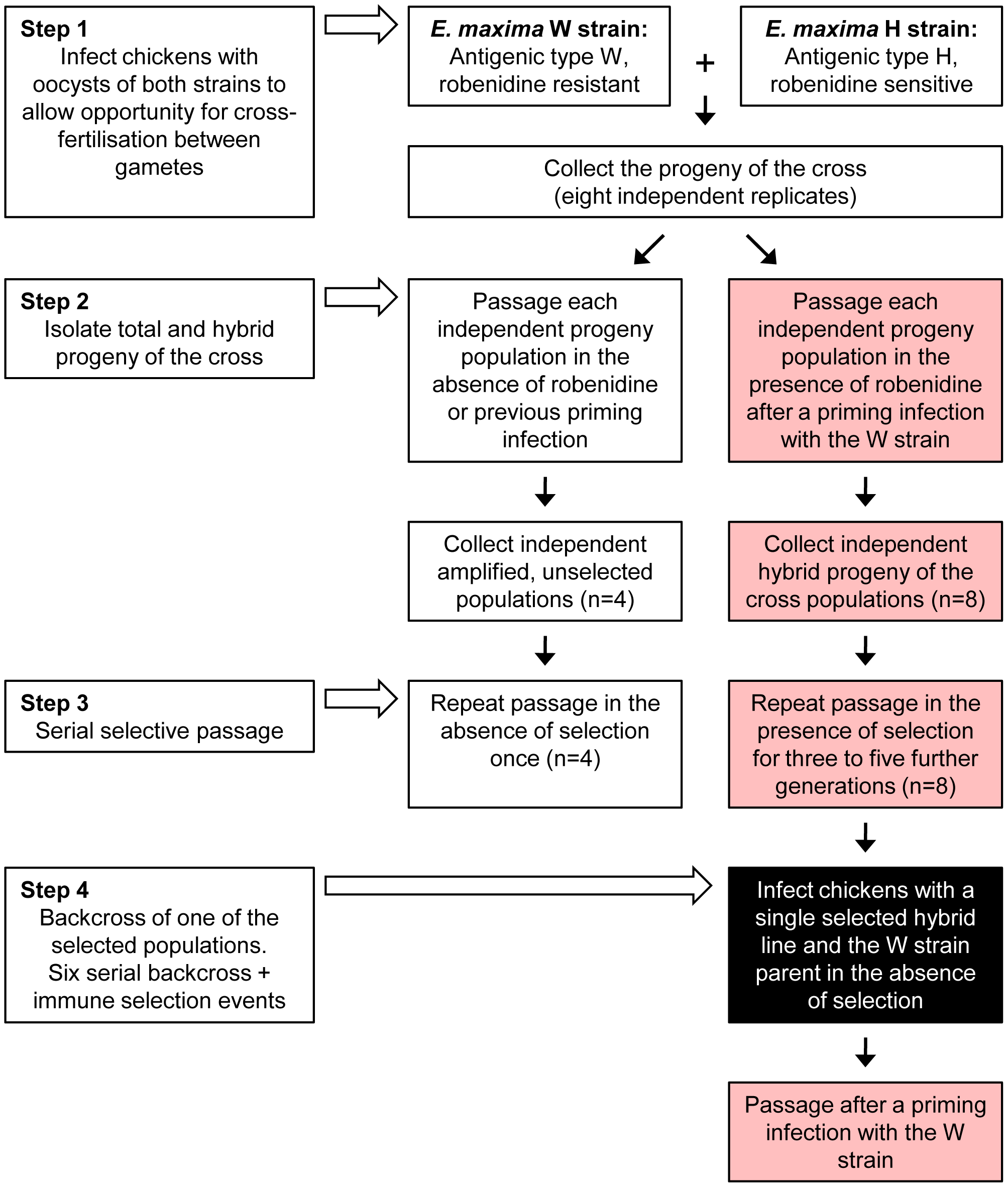 Production and selection of the parasite mapping panel.