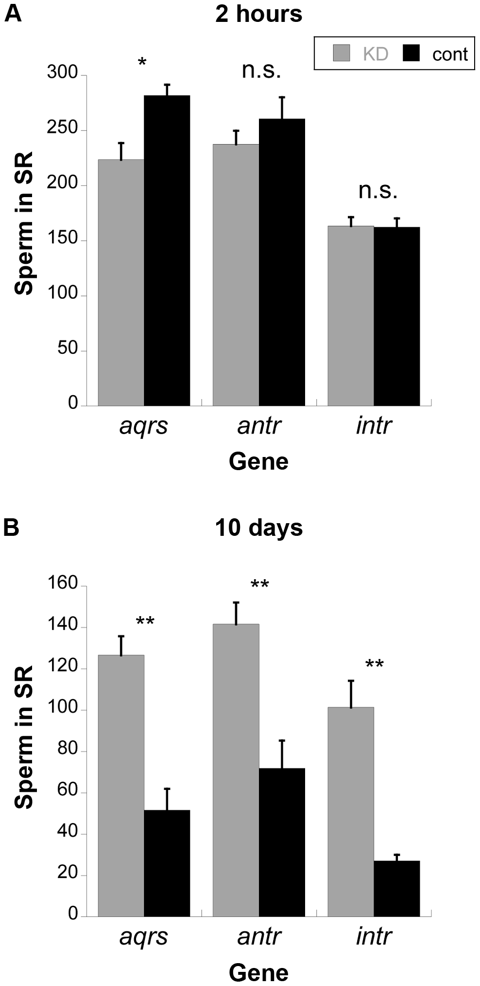 Average number of sperm stored in the seminal receptacles (SR) of wild-type females mated to knockdown or control males for new SP network proteins.