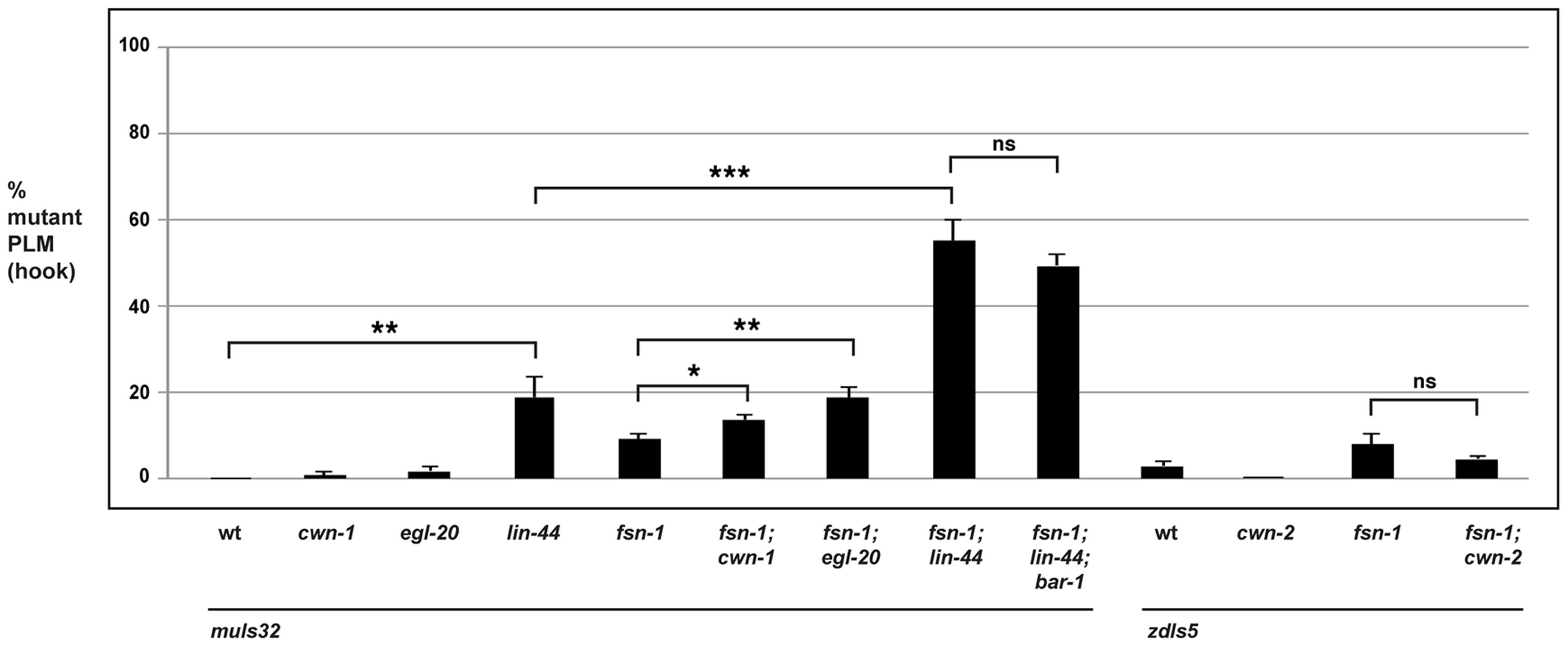 The Wnts <i>egl-20</i> and <i>lin-44</i> function through <i>bar-1</i> to regulate PLM axon termination.