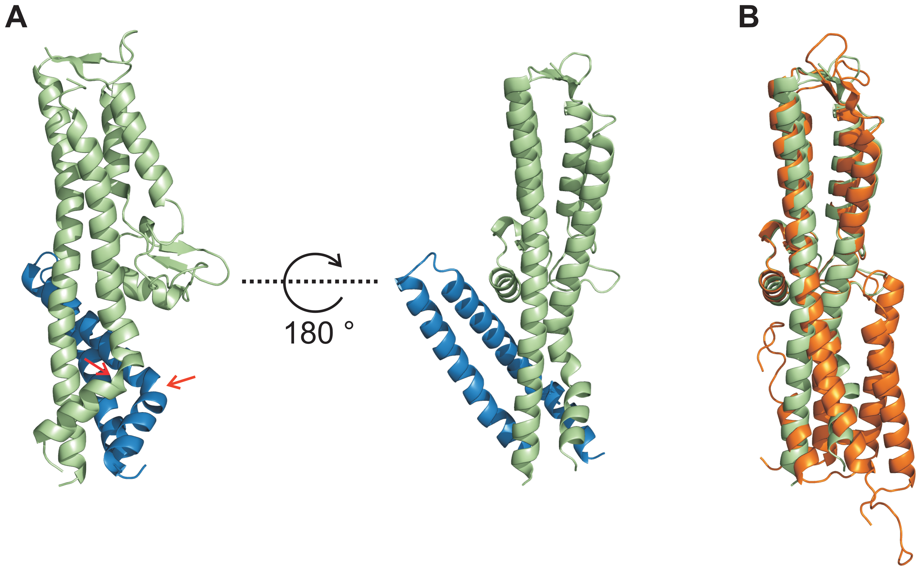 Conformational changes during interaction of SipD and PrgI.