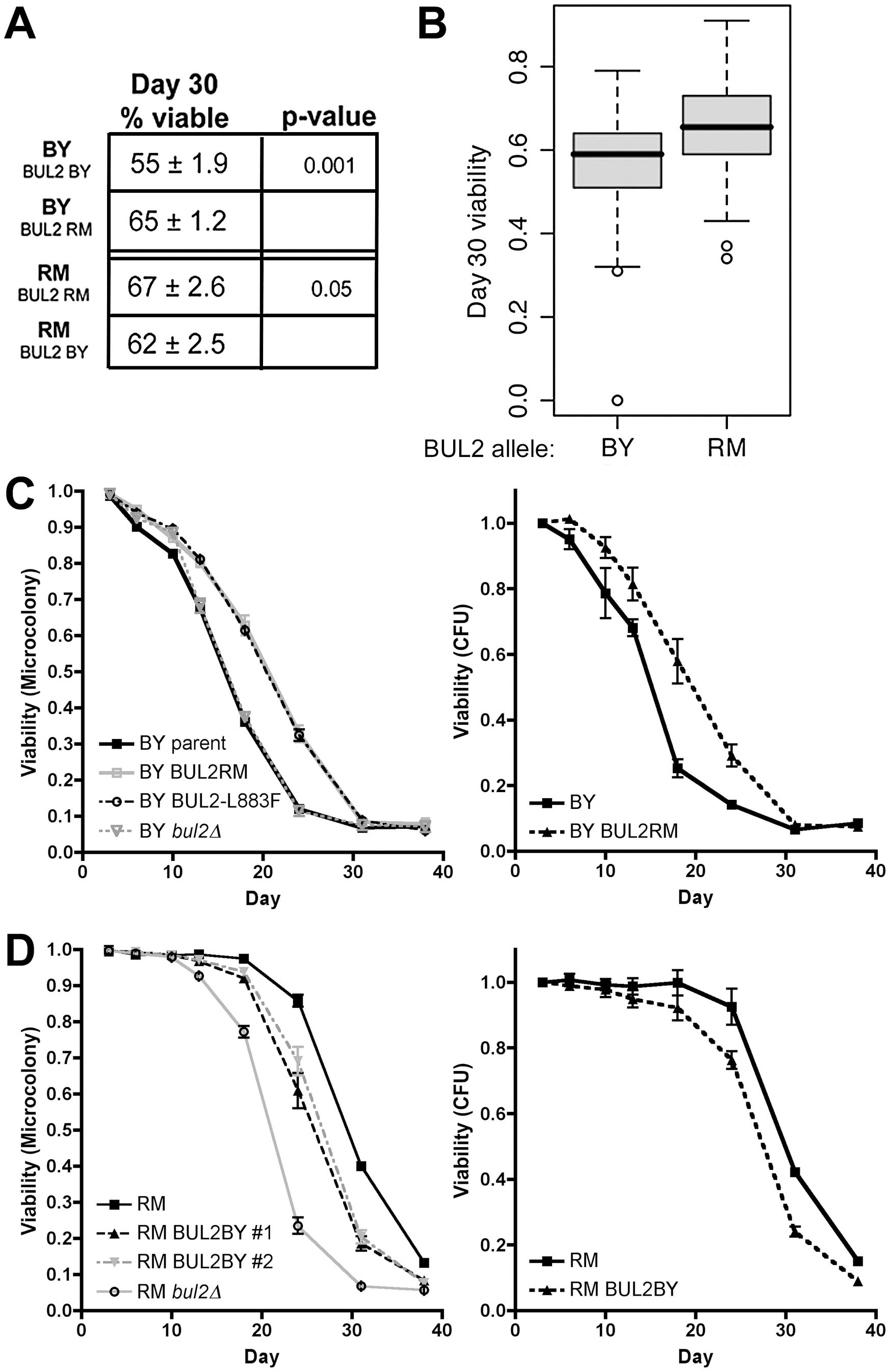 The BUL2 polymorphism regulates chronological lifespan.