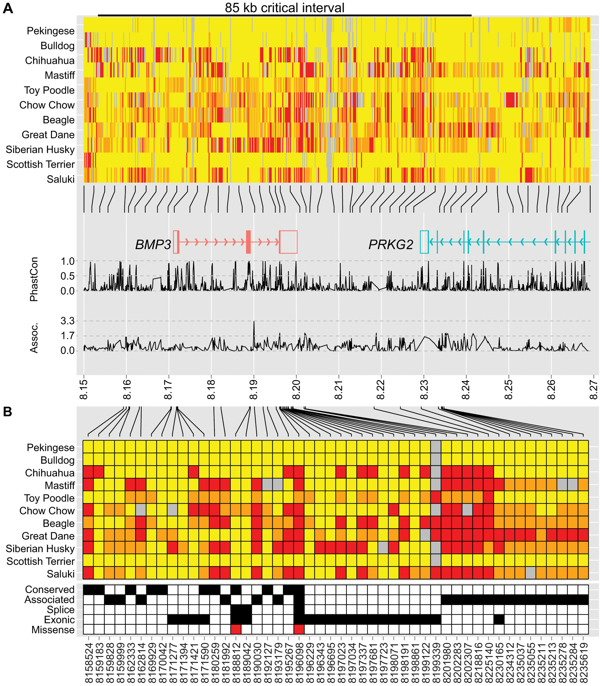 Genetic variation at the CFA32 QTL includes a brachycephaly-associated missense mutation within <i>BMP3</i>.