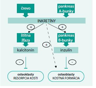 Schéma 2. Efekt inkretínov na kostný metabolizmus