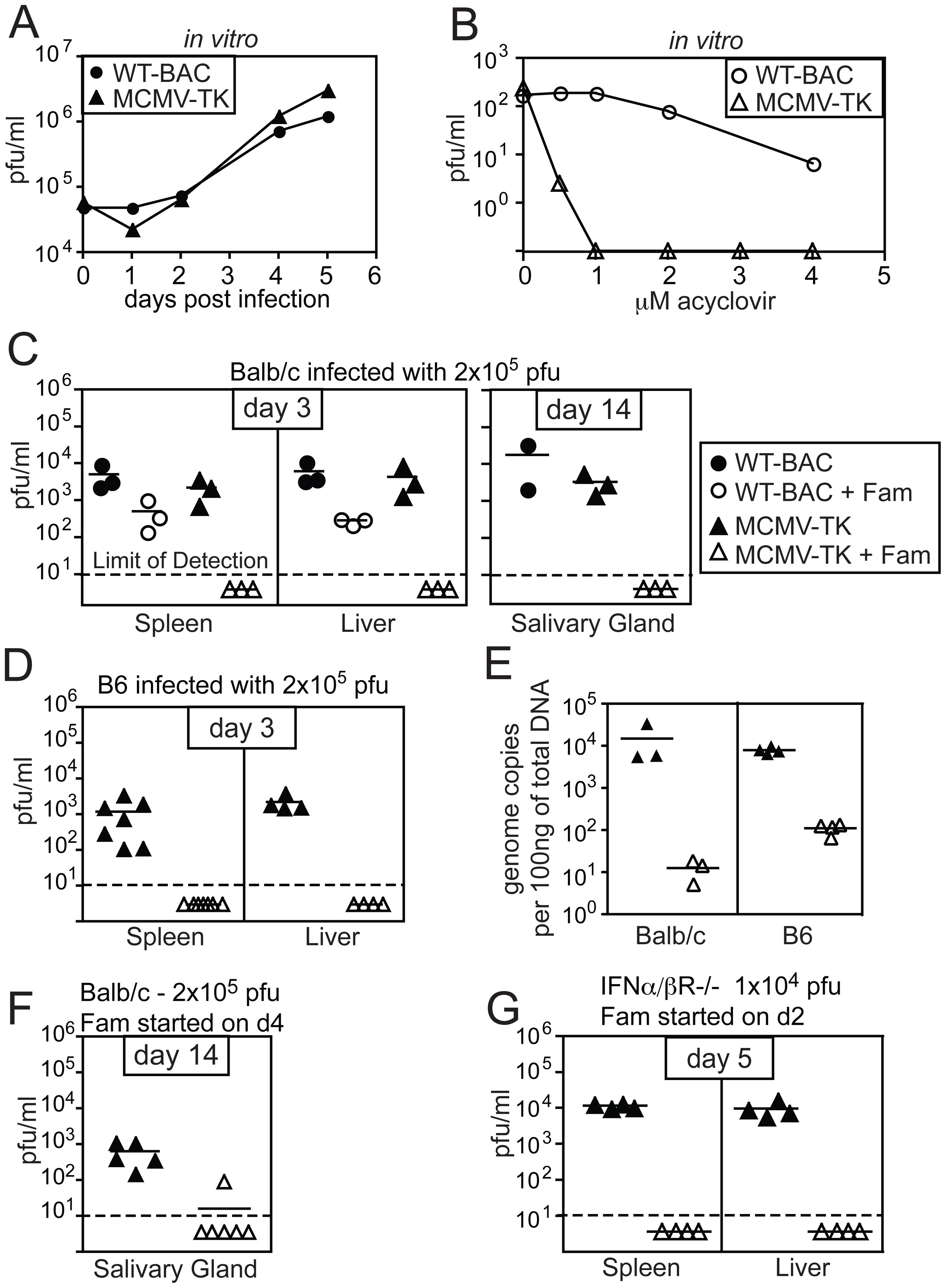 Replication of MCMV-TK is inhibited by acyclovir or famcyclovir.