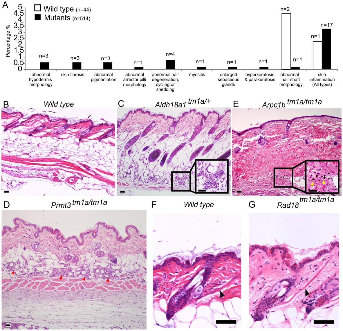Skin histopathology overview.