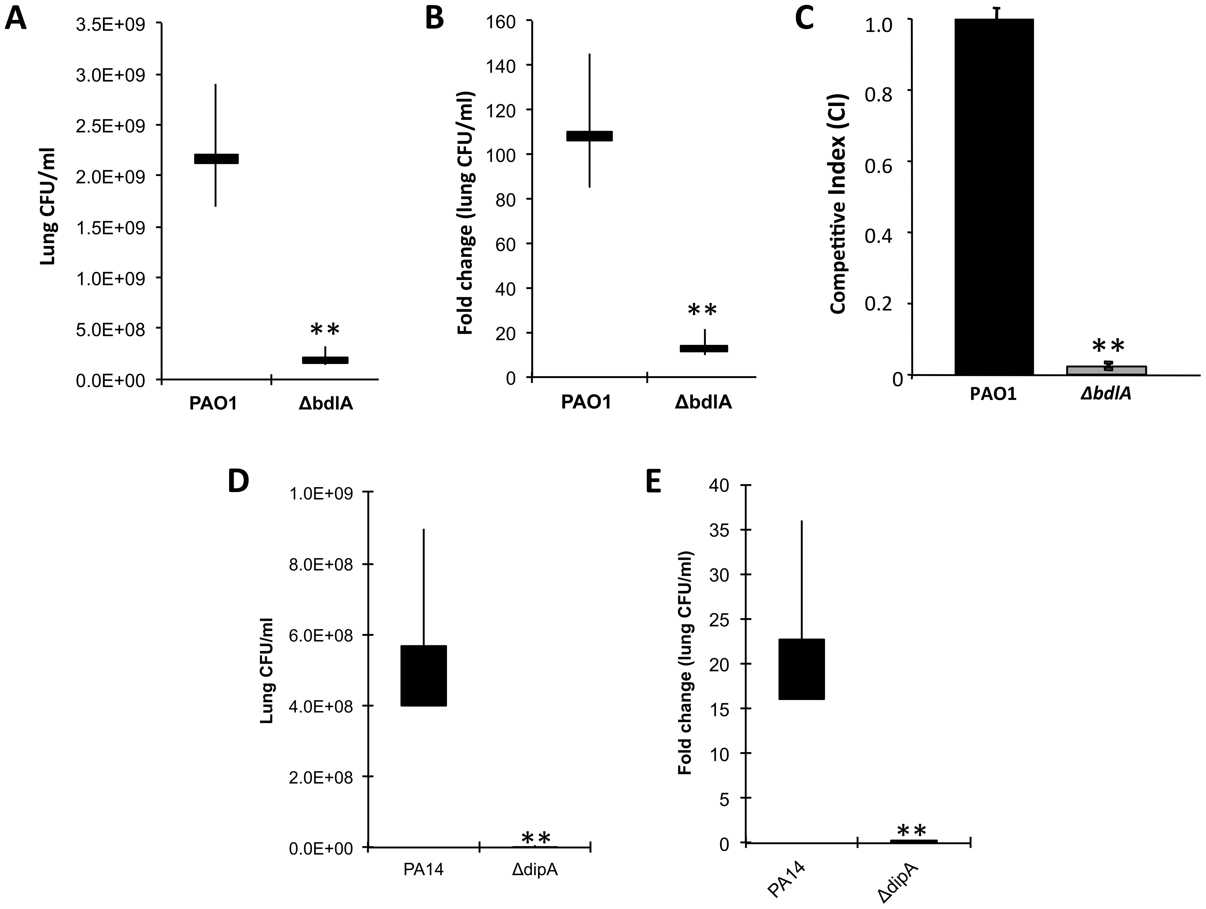 The non-dispersing <i>P. aeruginosa ΔbdlA</i> and <i>ΔdipA</i> mutant strains are less virulent and competitive compared to <i>P. aeruginosa</i> wild type as determined using an acute murine pneumonia infection model.