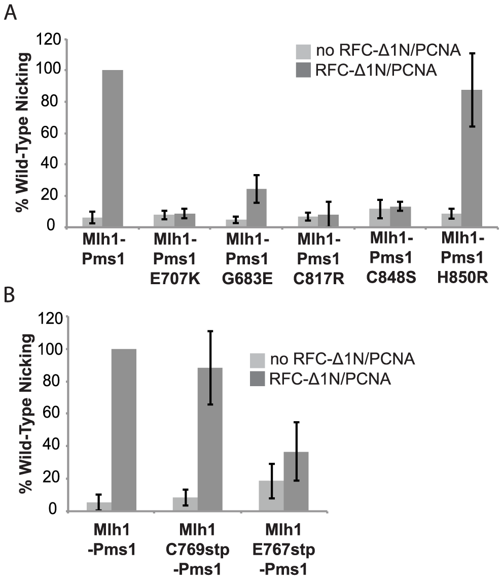 Metal coordination mutations eliminate the ability of Mlh1-Pms1 to nick closed circular DNA.
