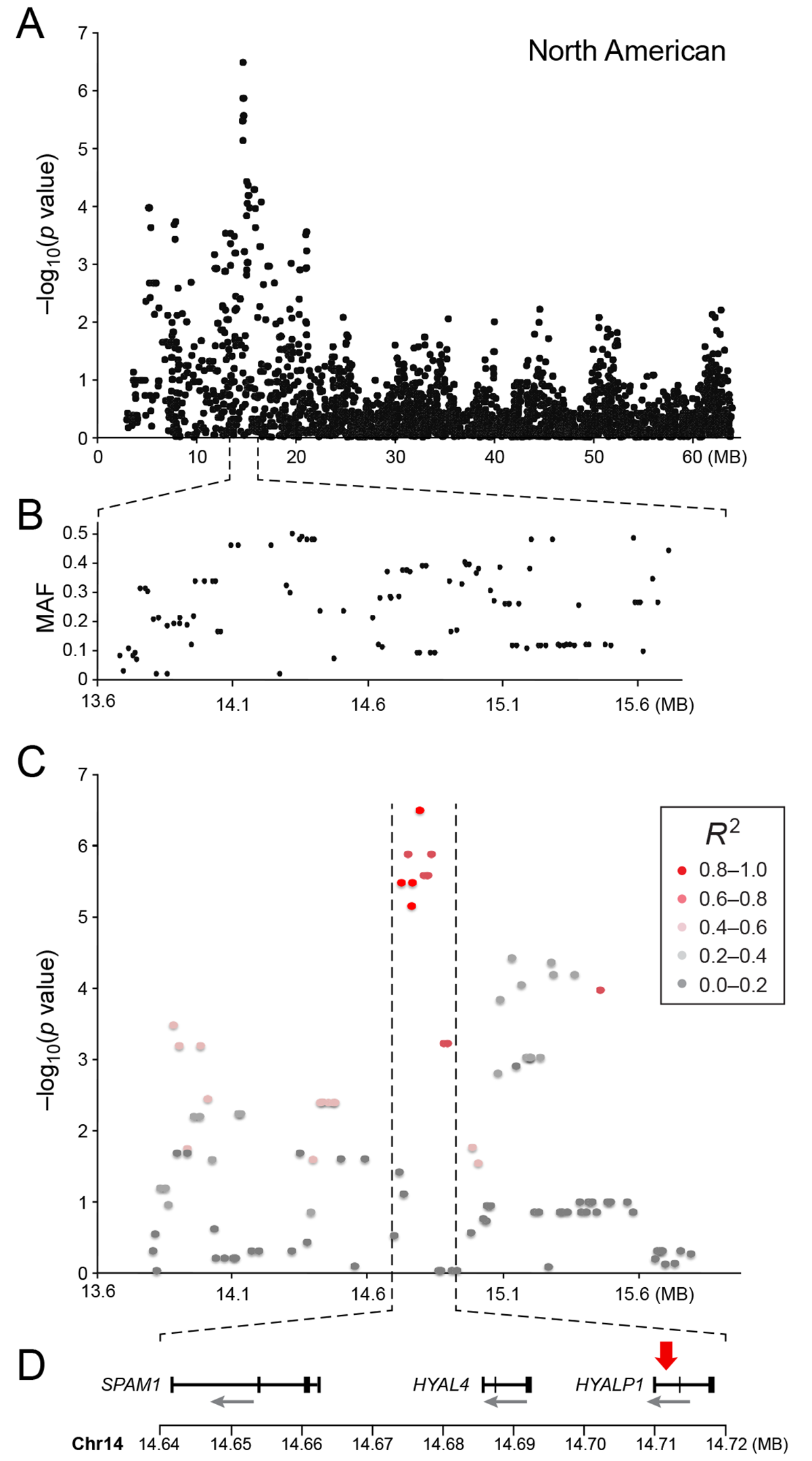 a) Close up view of the most associated region from the American GWAS analysis. b) Minor allele frequency of the associated region. c) Further close up of the associated peak showing the LD structure of the SNPs in the area relative to the most associated SNP. d) Close up view of the genes located in the area of the associated haplotype.