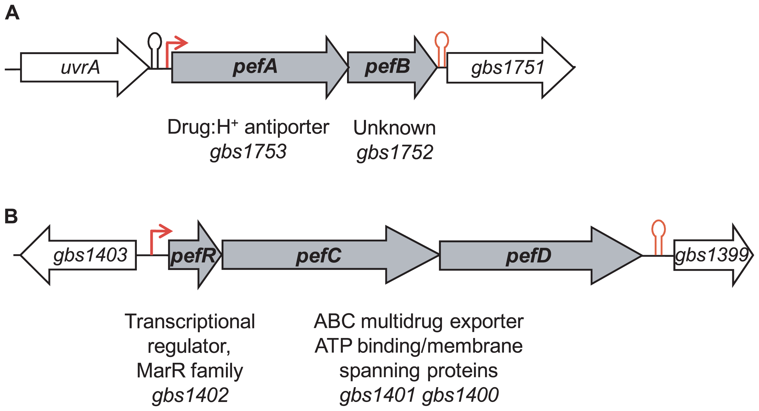 Genetic context of two loci for which expression is heme-induced.