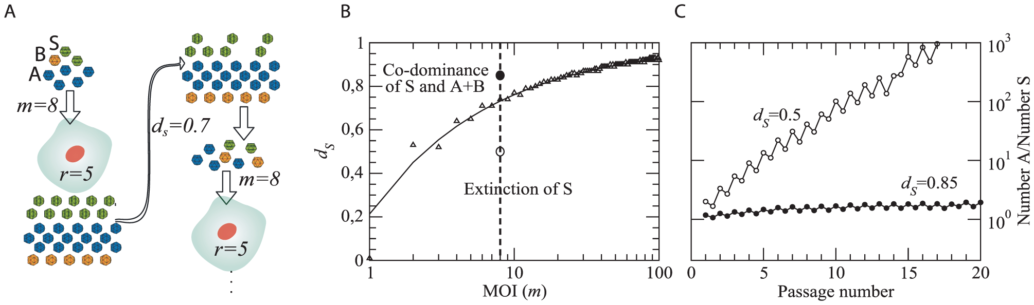 Computational model for the competition between ST and segmented forms.