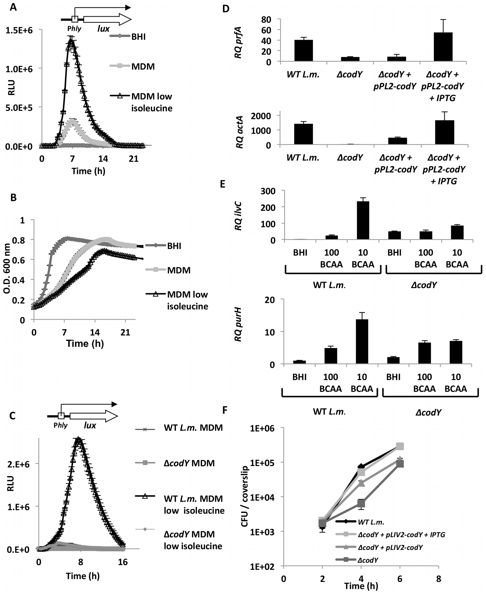 CodY regulates the transcription of virulence and metabolic genes under limiting concentrations of BCAAs.