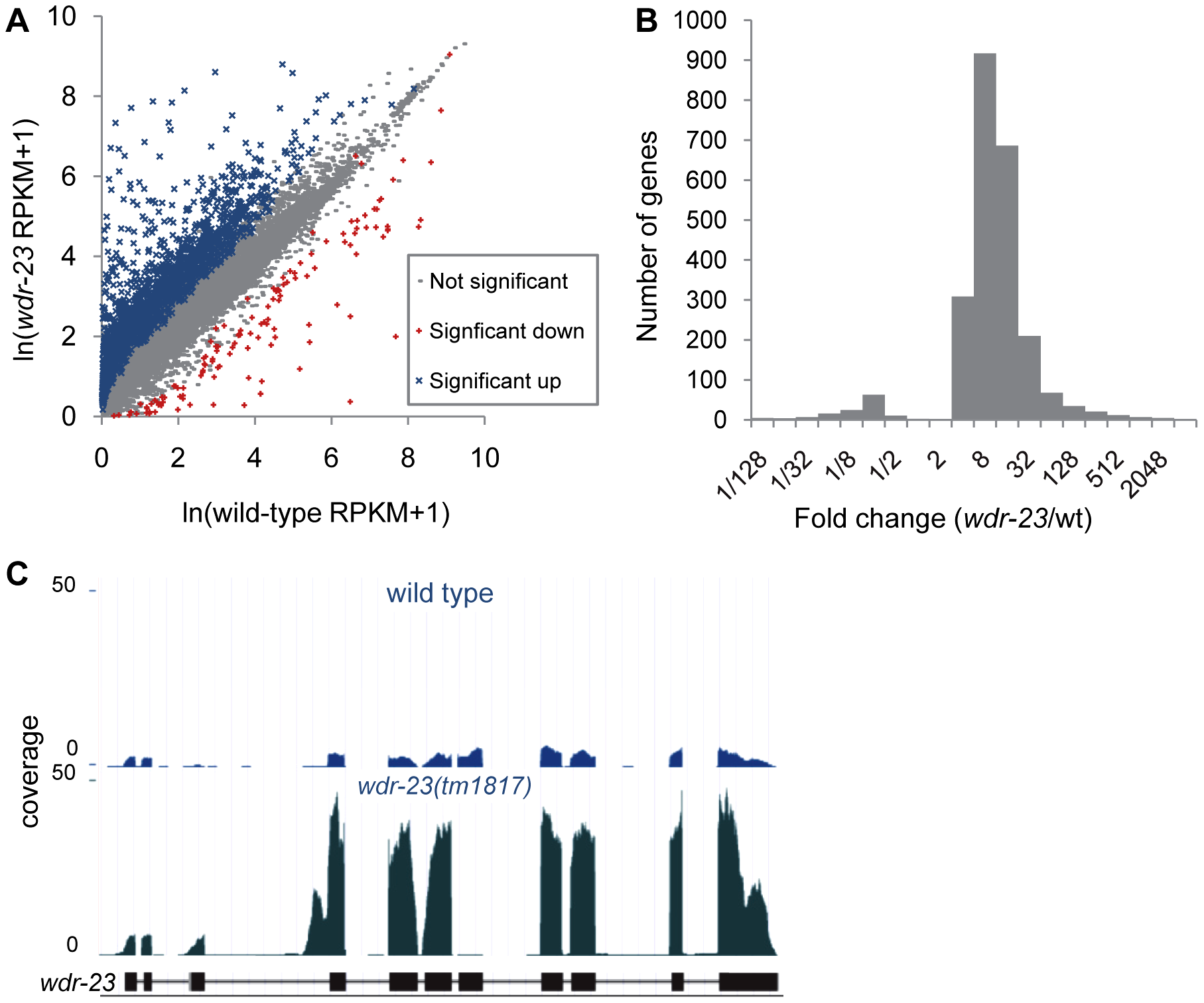 Analysis of whole-transcriptome RNA sequencing of <i>wdr-23</i> mutants.