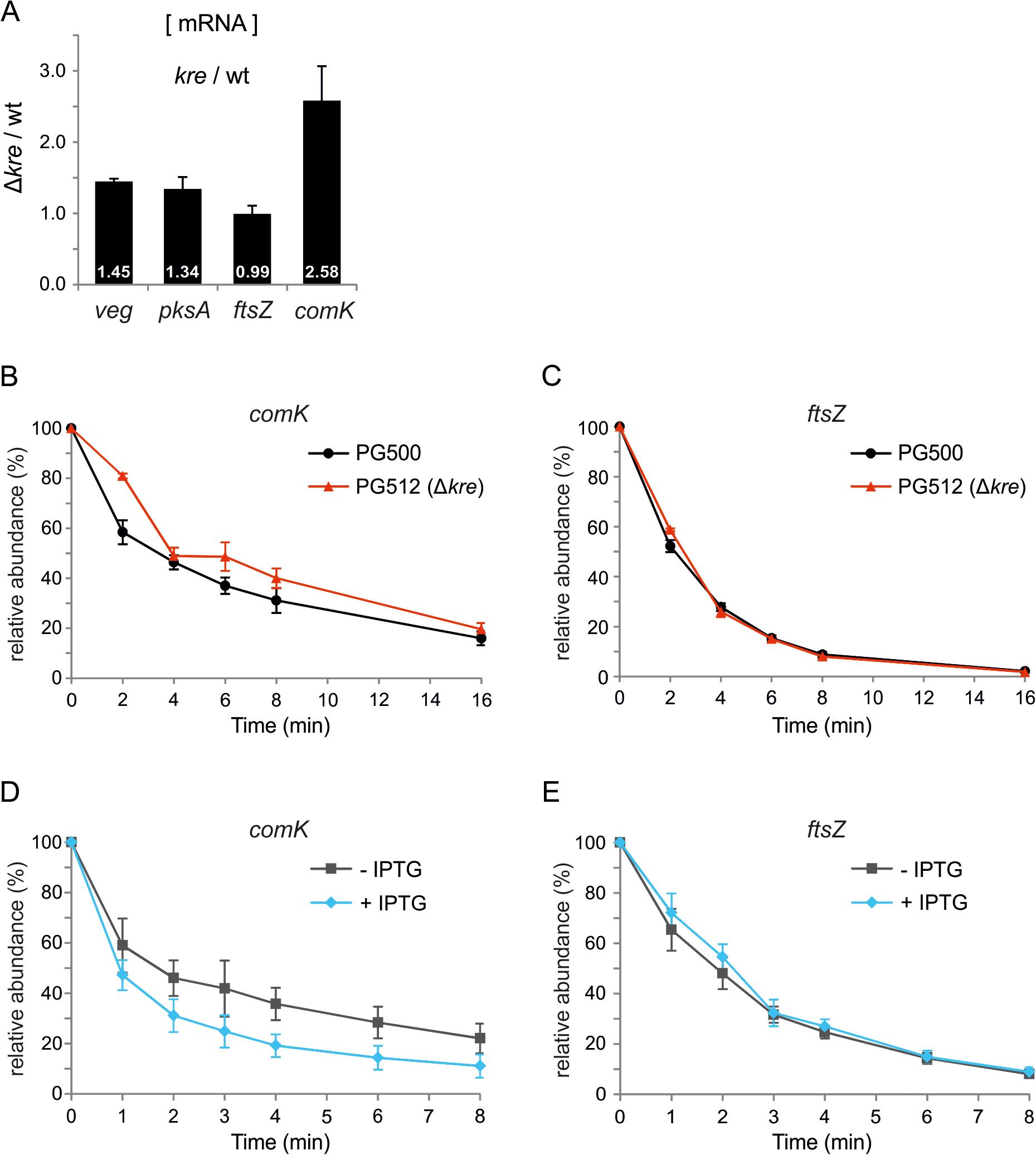 Kre affects <i>comK</i> mRNA stability.