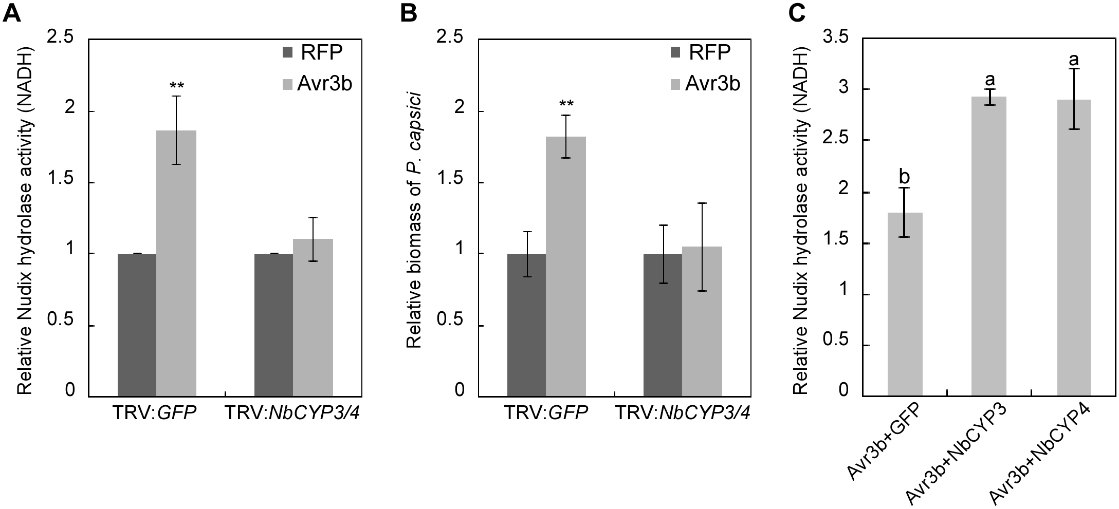 NbCYP3 and NbCYP4 are required for the Nudix hydrolase and the virulence activity of Avr3b in <i>N</i>. <i>benthamiana</i>.