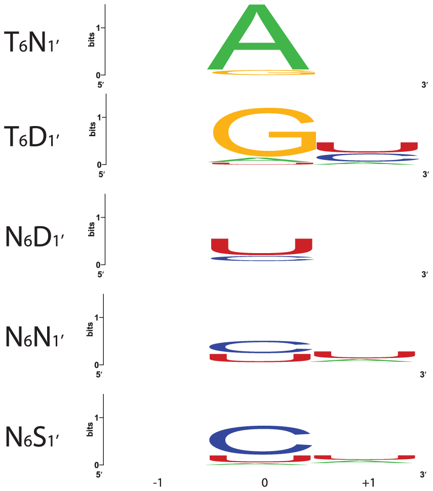 Nucleotides That Align with the Most Frequent Combinations of Amino Acids at Positions 6 and 1′.