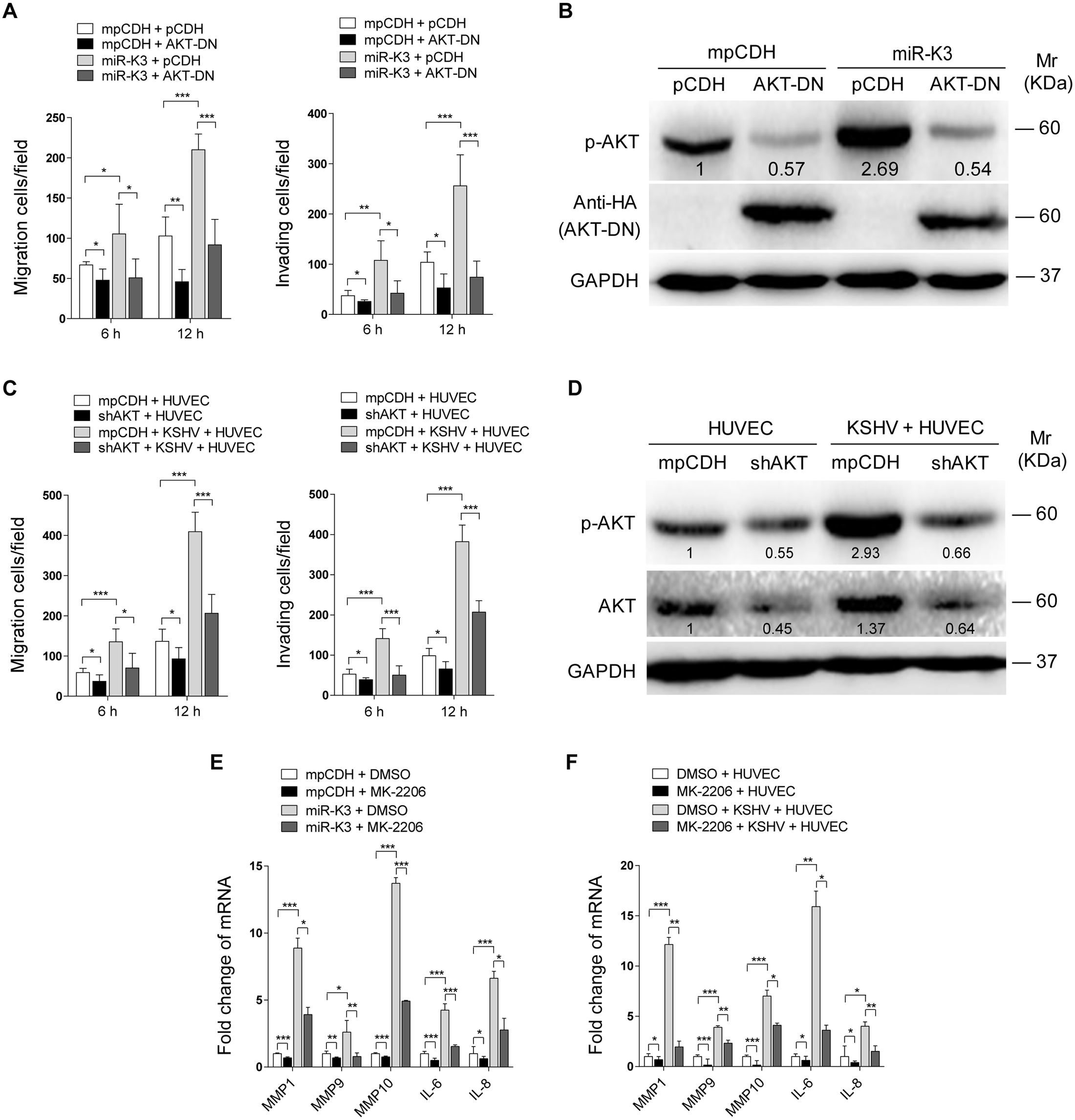 Activation of AKT is necessary to miR-K3-induced endothelial cell migration and invasion.
