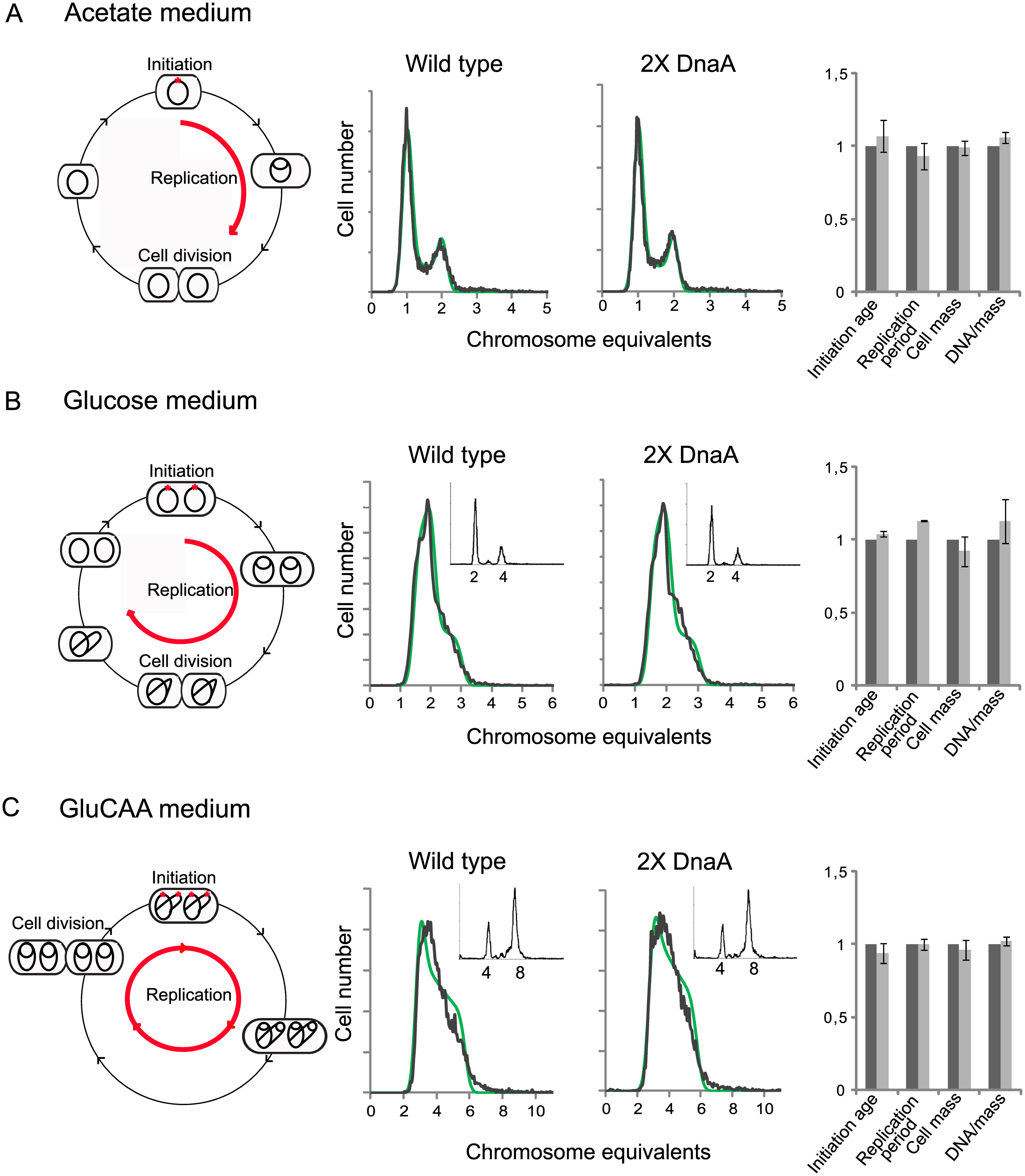 Cell cycle parameters are not changed in cells with a two-fold DnaA concentration.