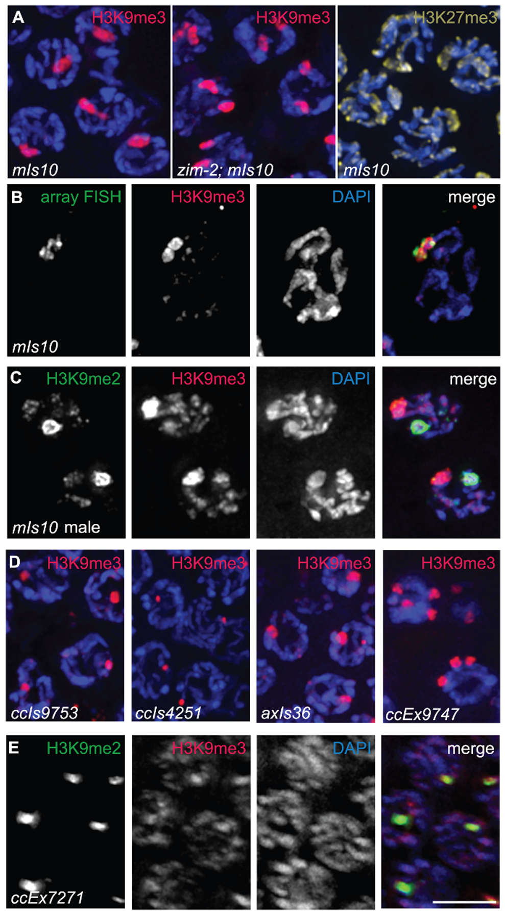 Arrays composed of transgenes with soma-specific promoters are enriched for H3K9me3.