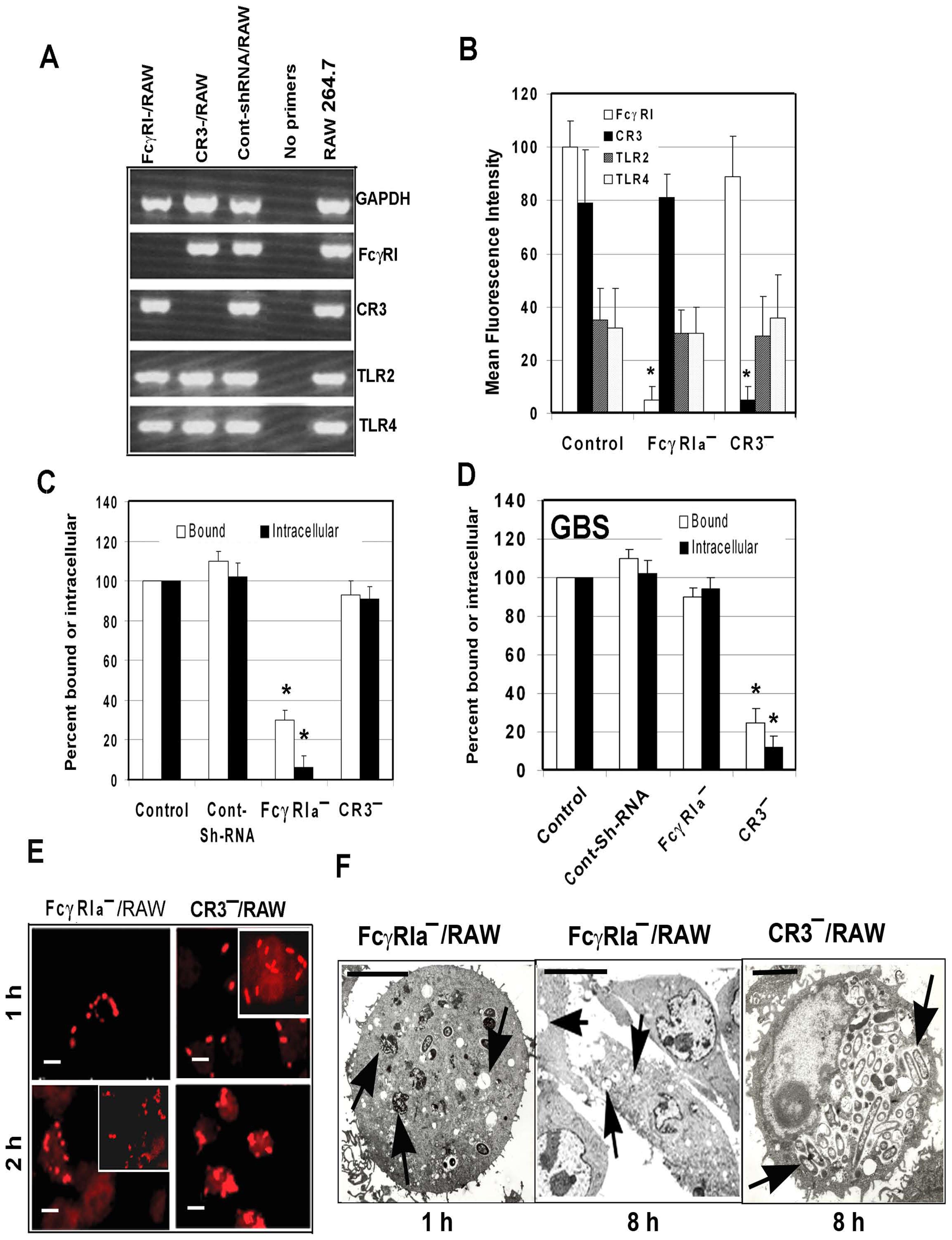 Suppression of FcγRIa expression using shRNA prevents <i>E. coli</i> K1 entry into RAW 264.7 cells.