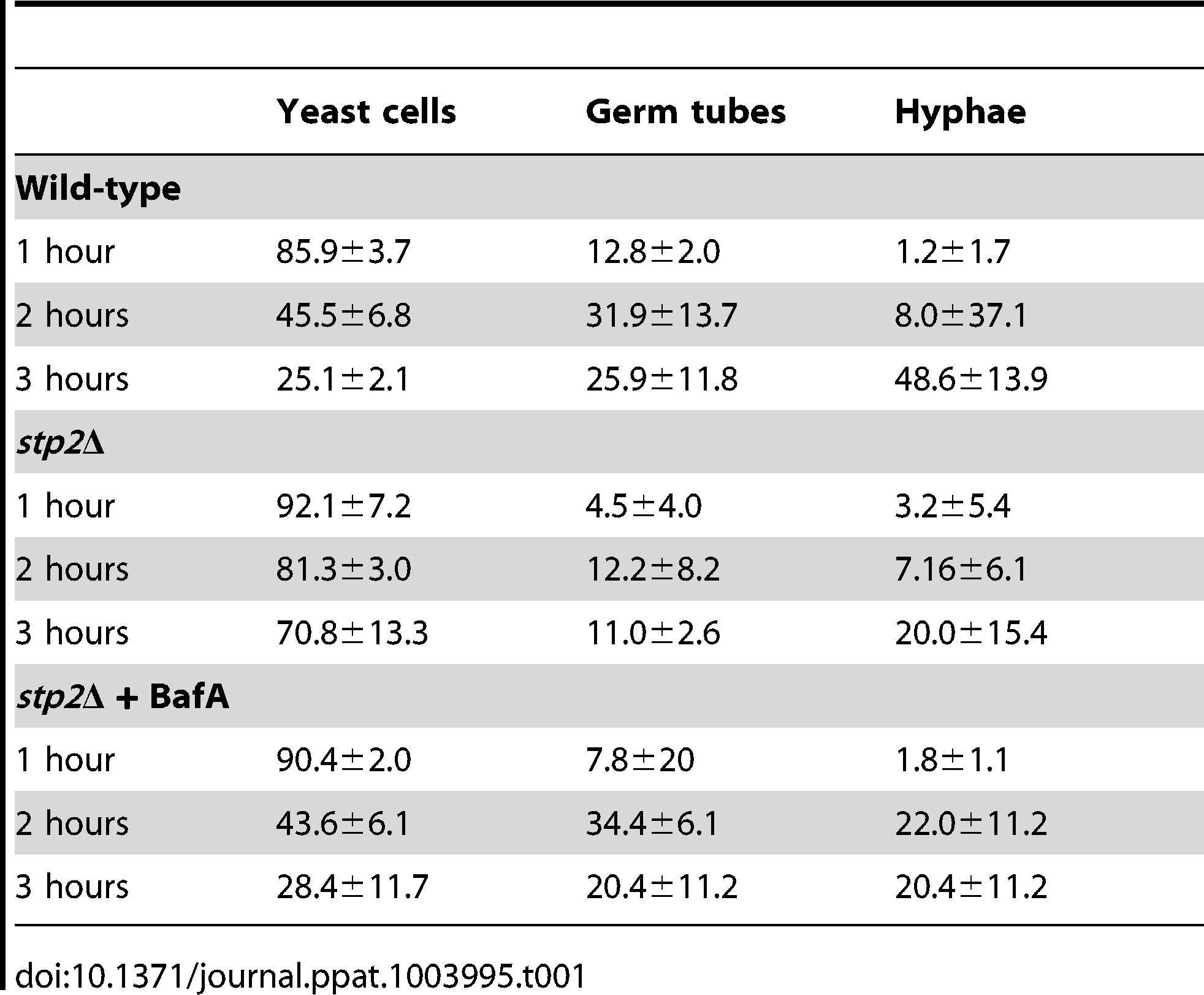 Morphology changes in phagocytosed <i>C. albicans</i> cells.