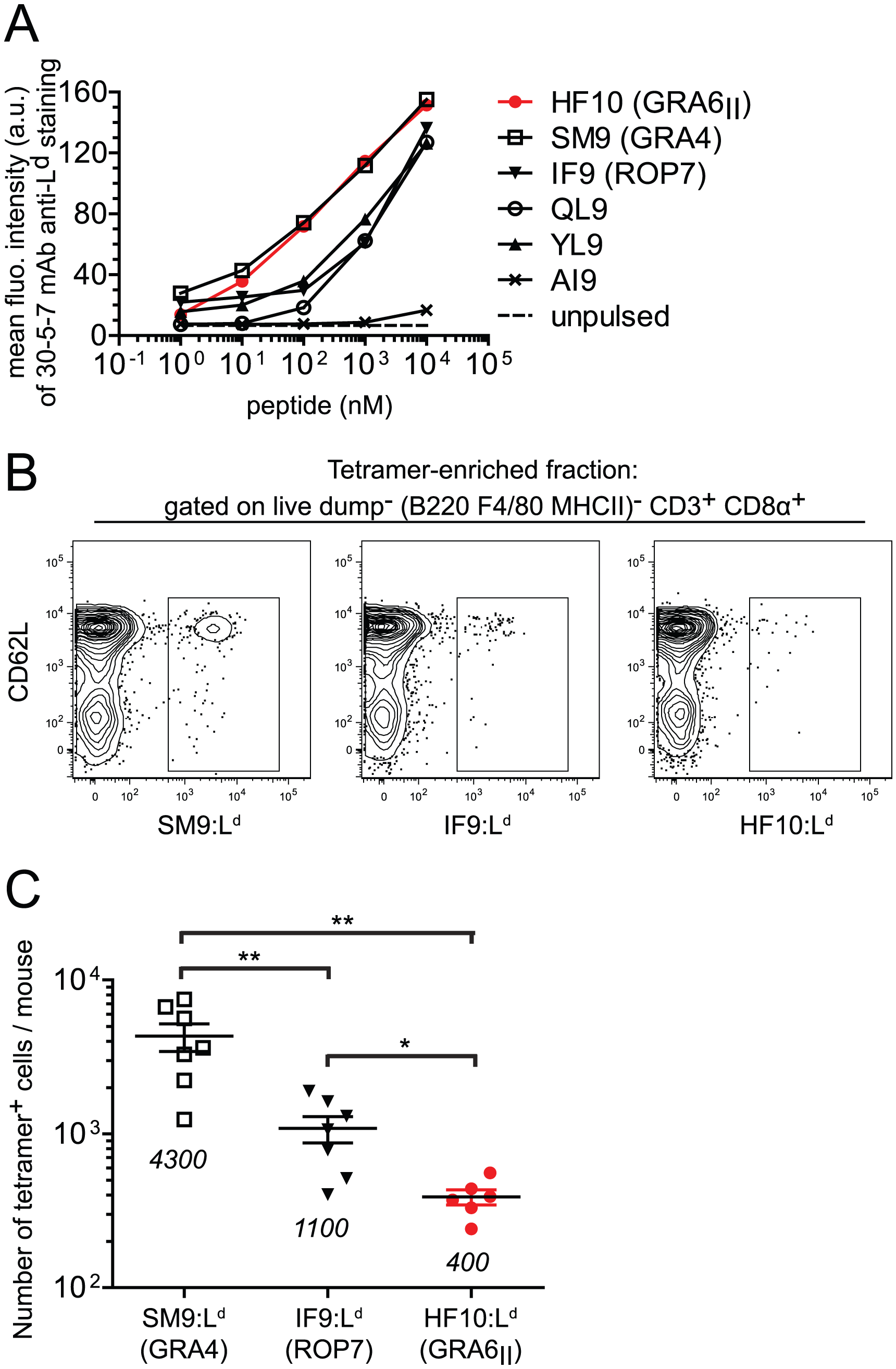 Immunodominance of GRA6<sub>II</sub>-derived HF10 cannot be explained by peptide affinity for L<sup>d</sup> or naïve T cell frequency.