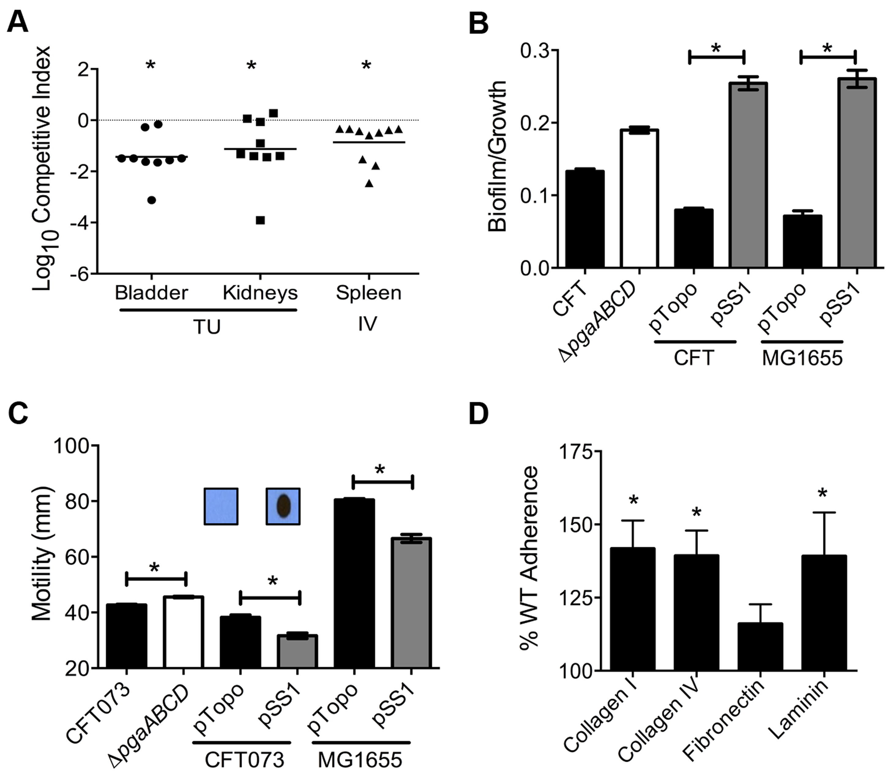 Poly-N-acetyl glucosamine is a fitness factor that promotes UPEC biofilm formation.