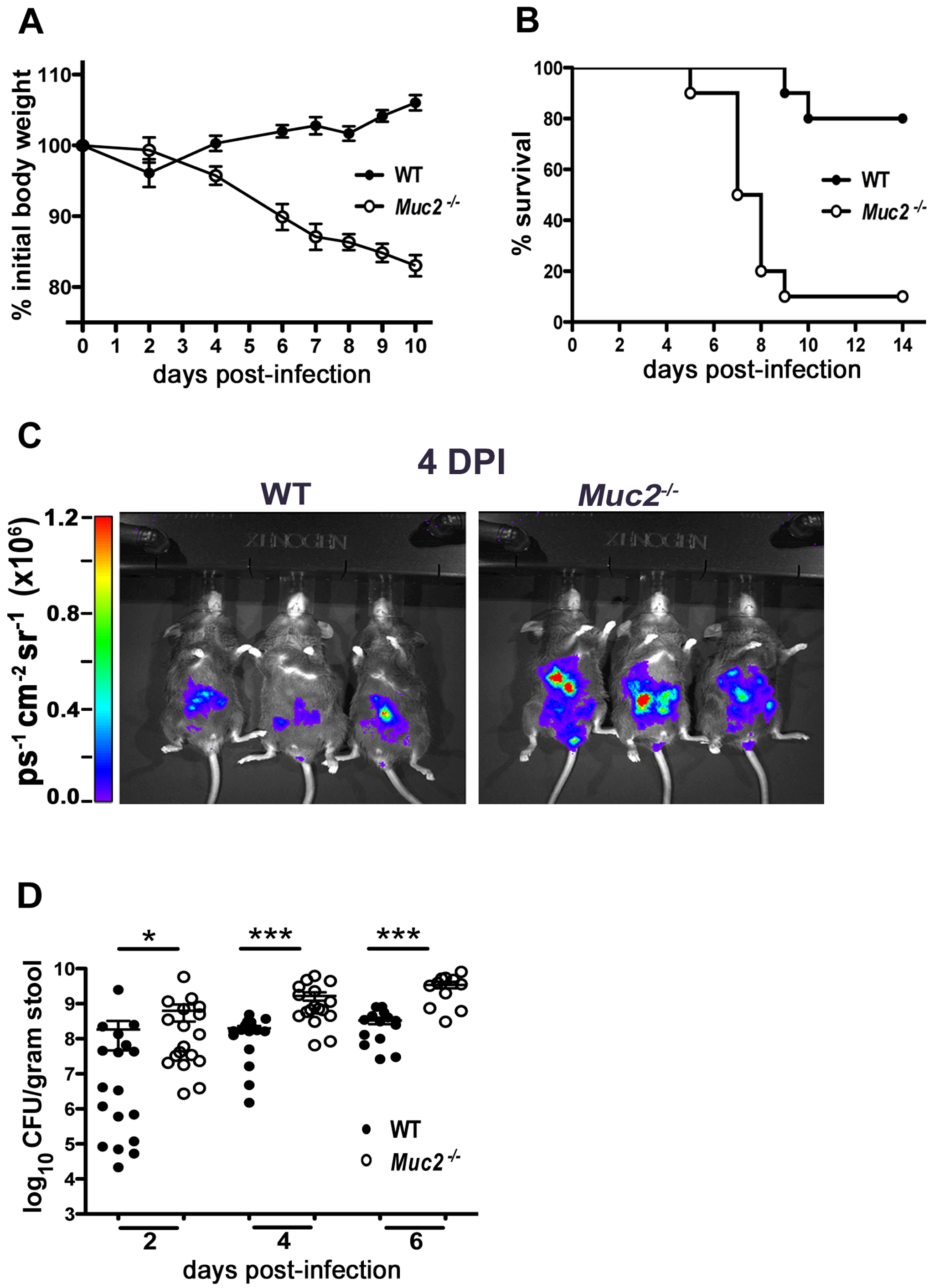 <i>Muc2<sup>−/−</sup></i> mice exhibit dramatic susceptibility to <i>C. rodentium</i>-induced morbidity and mortality.