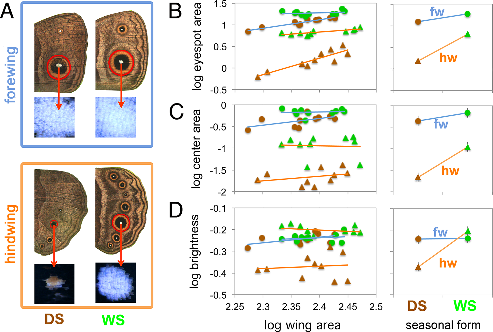 Forewing eyespots display lower levels of plasticity relative to hindwing eyespots.