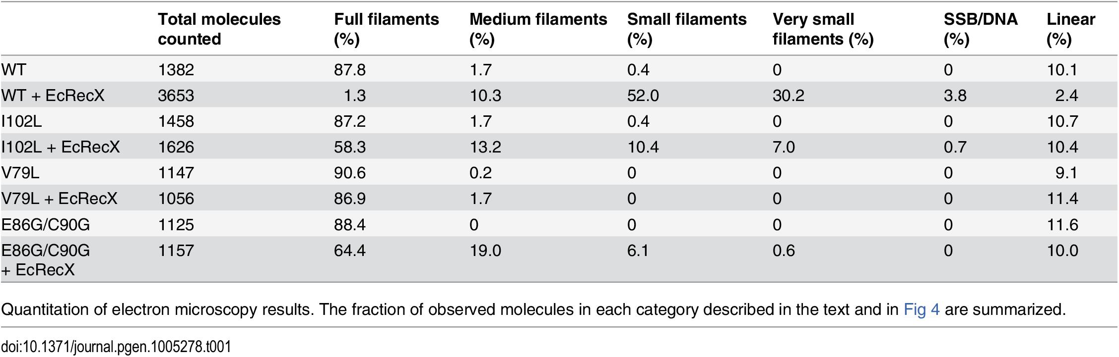 Effect of EcRecX on RecA and RecA variant filaments.