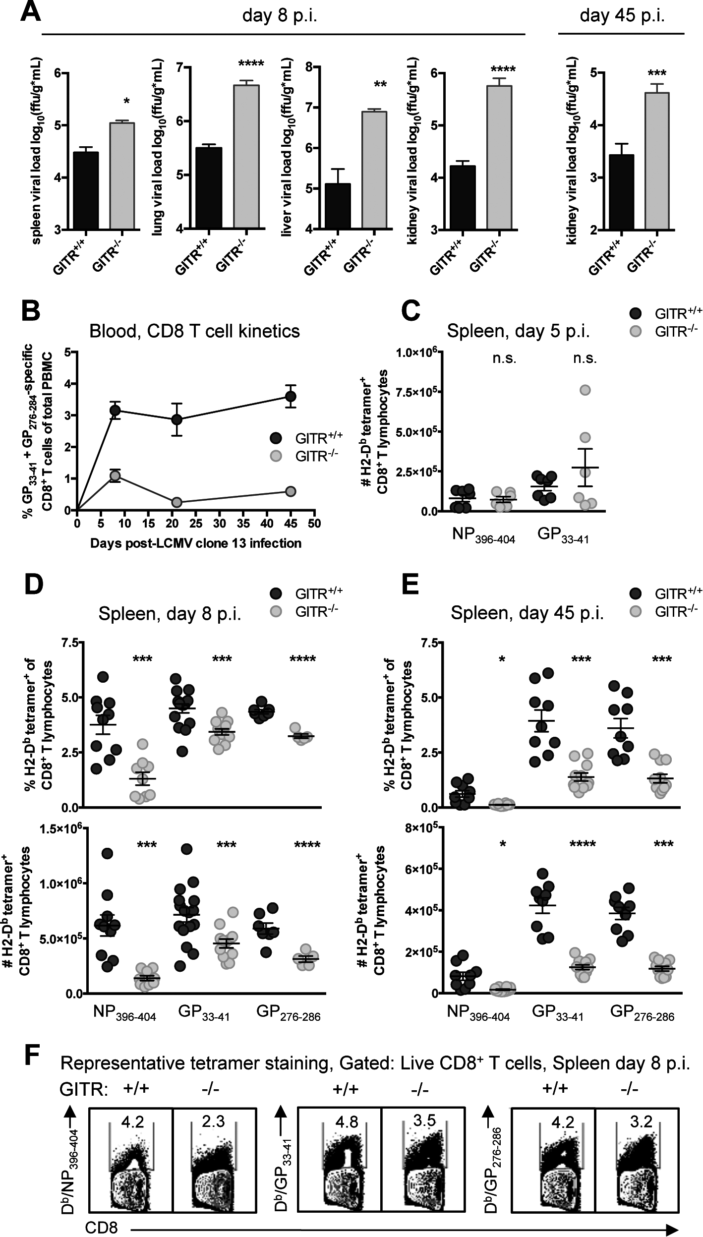 GITR<sup>-/-</sup> mice have impaired CD8 T cell responses and compromised control of chronic LCMV cl 13 infection.