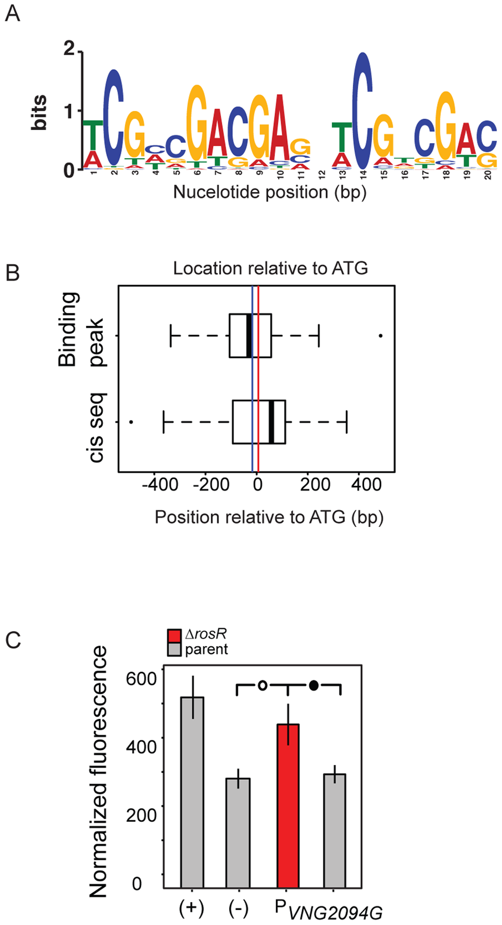 RosR binds to an imperfect palindromic cis-regulatory sequence.