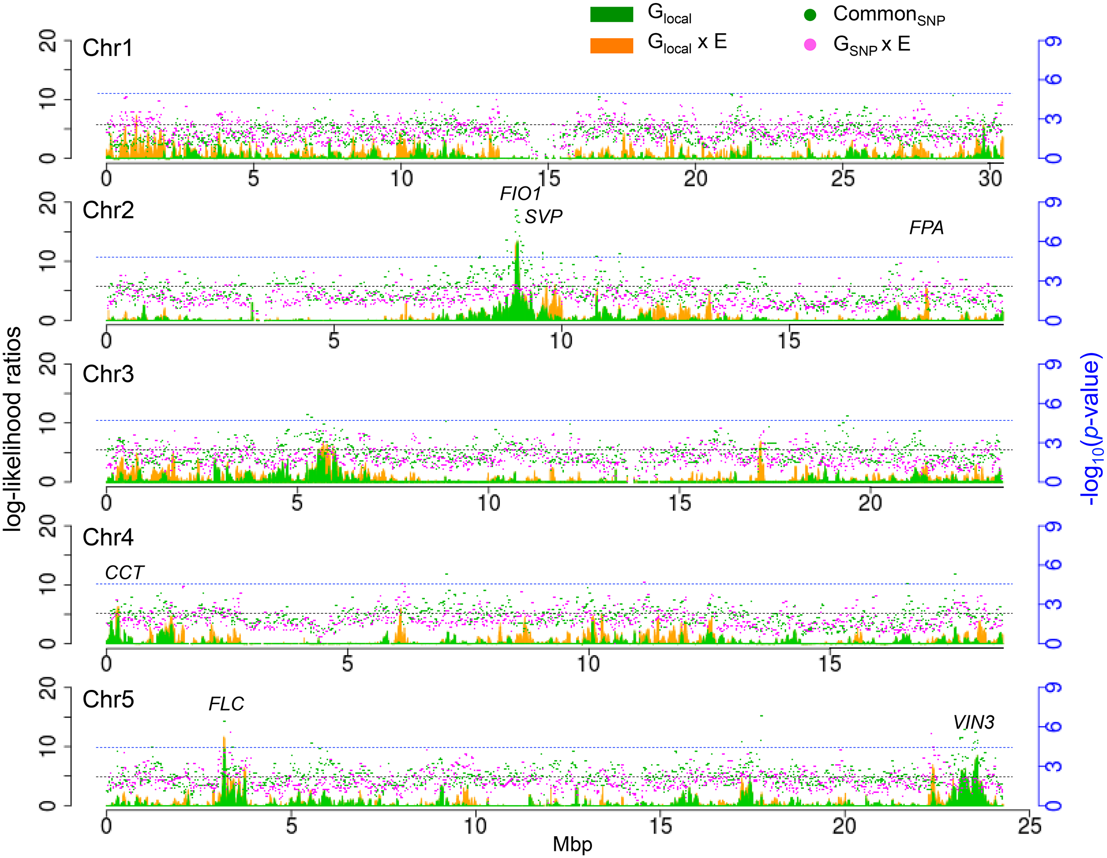 Genome-wide G and G x E effects for SNPs and well as local variance components.