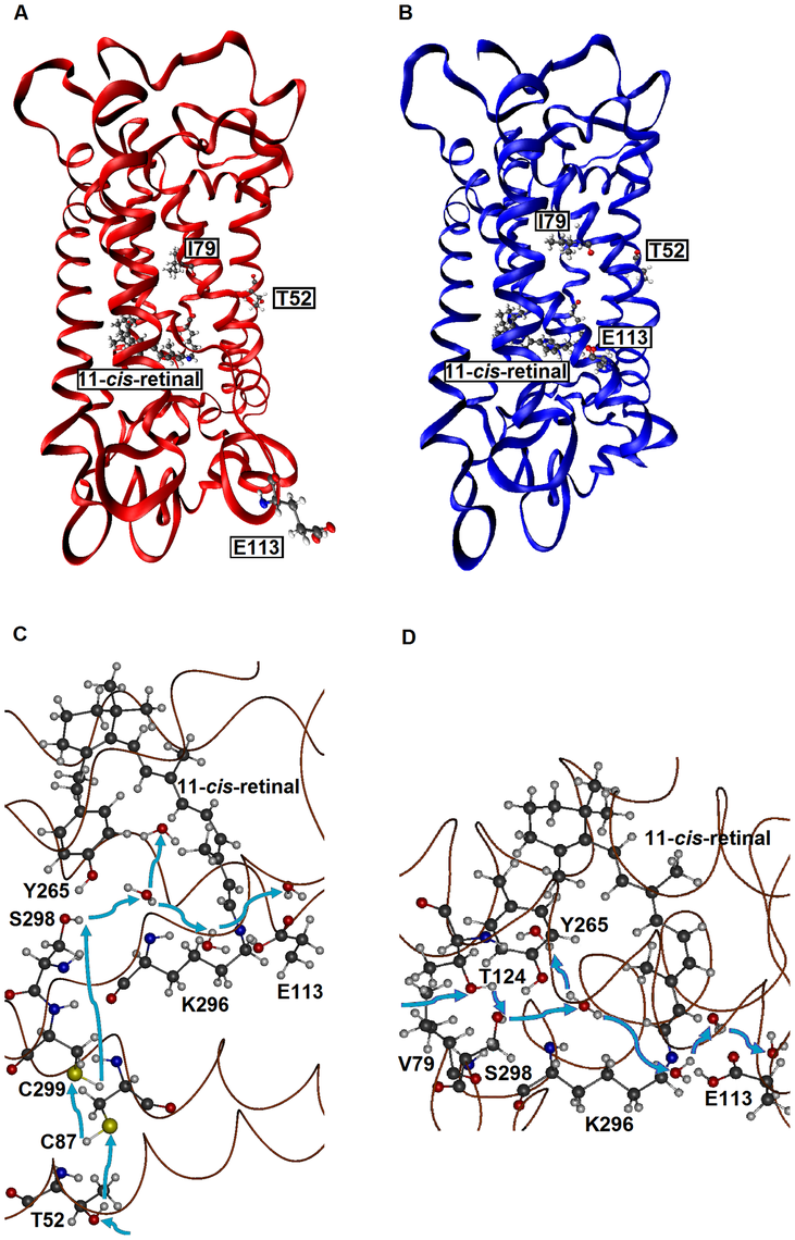 The tertiary structures of SWS1 pigments.