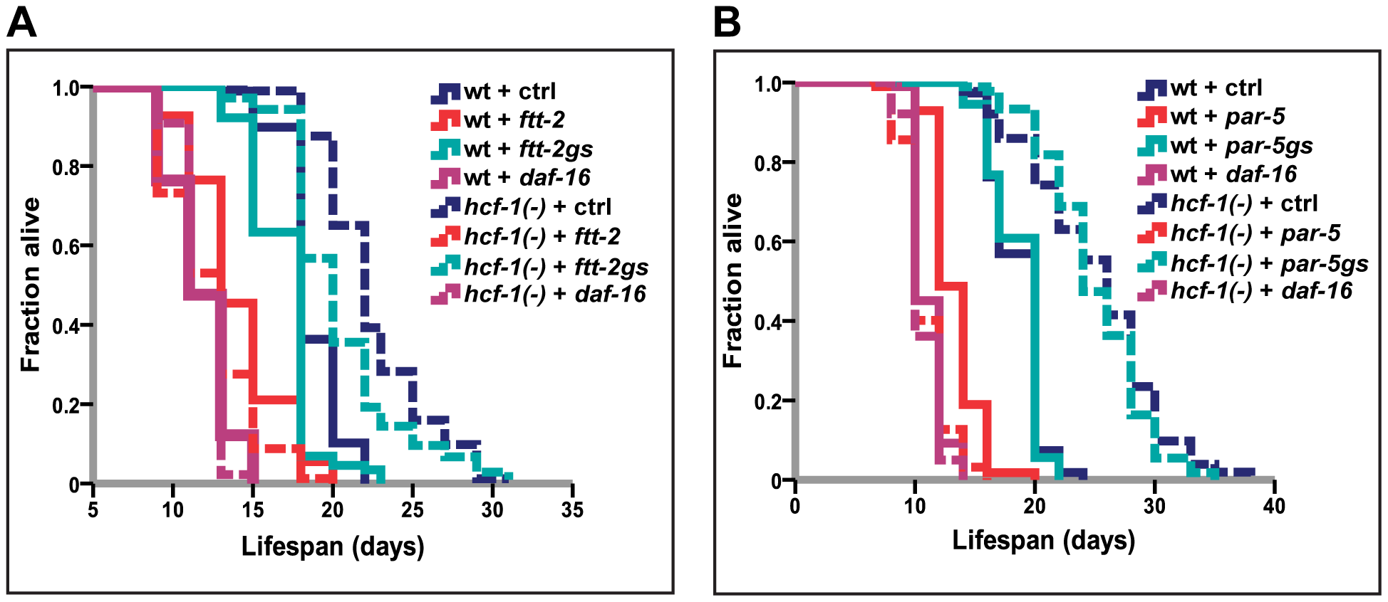 <i>14-3-3</i> are required for lifespan extension conferred by <i>hcf-1(pk924)</i> mutation.