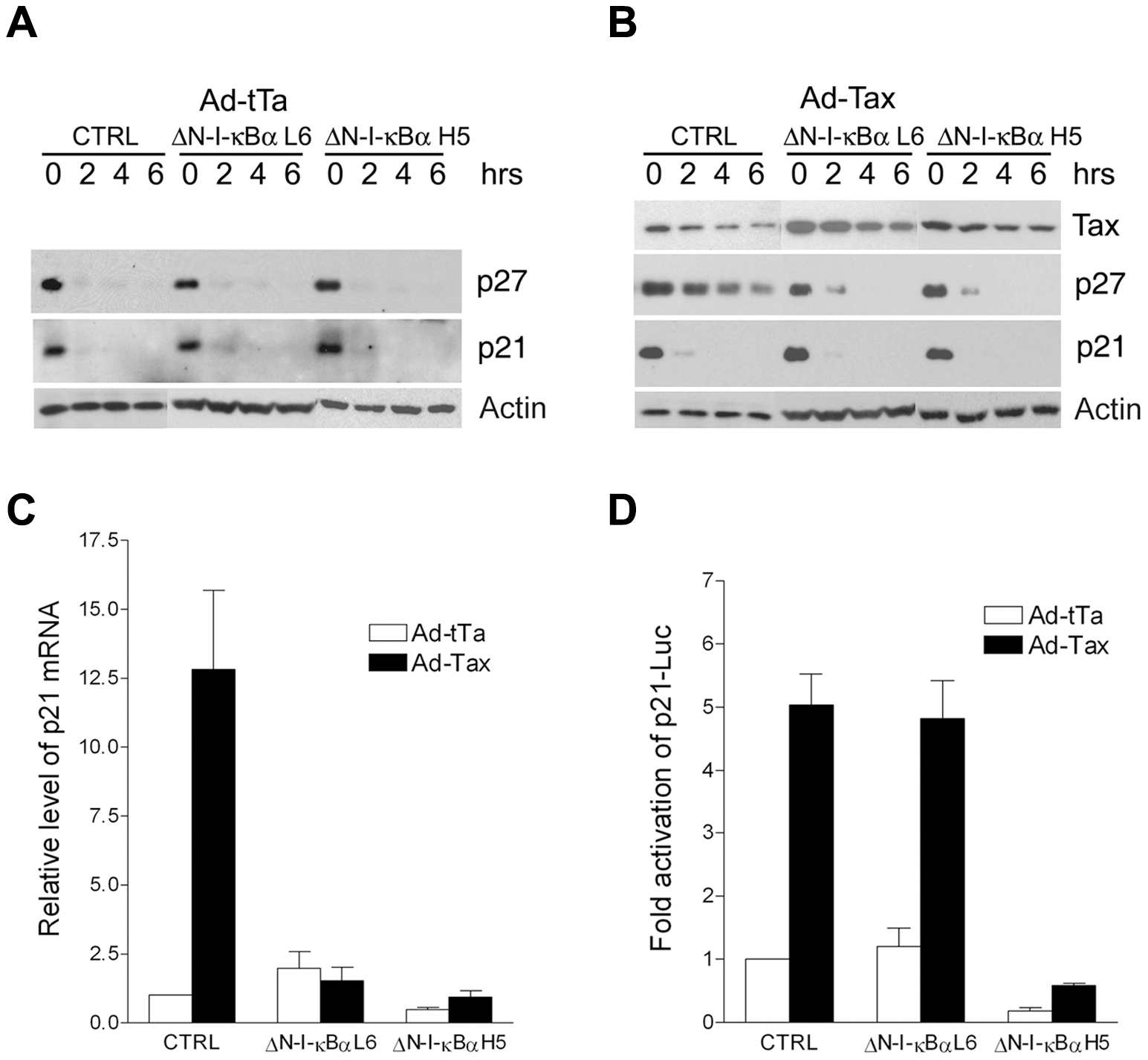Inhibition of NF-κB prevents the stabilization of p27 protein and the up-regulation of p21 mRNA, but not the trans-activation of p21 promoter by Tax.