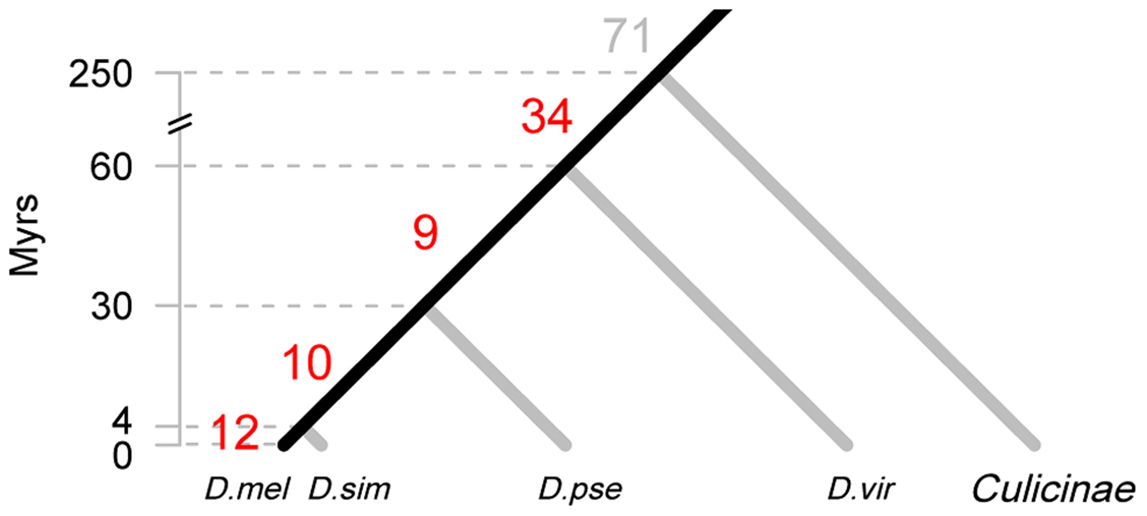 Origin of new miRNAs at different evolutionary periods.