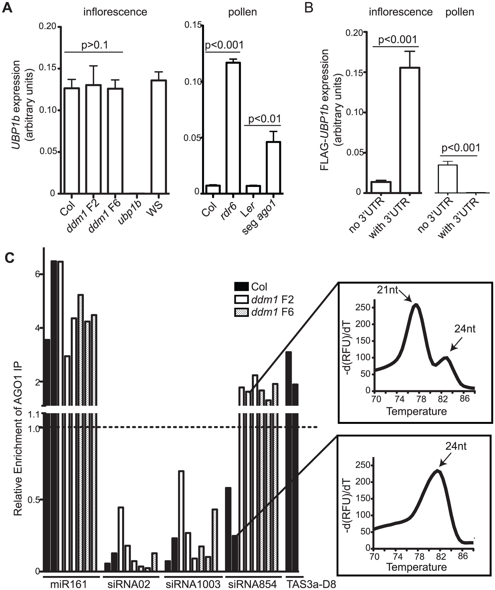 Tissue-specific regulation of <i>UBP1b</i> by siRNA854.