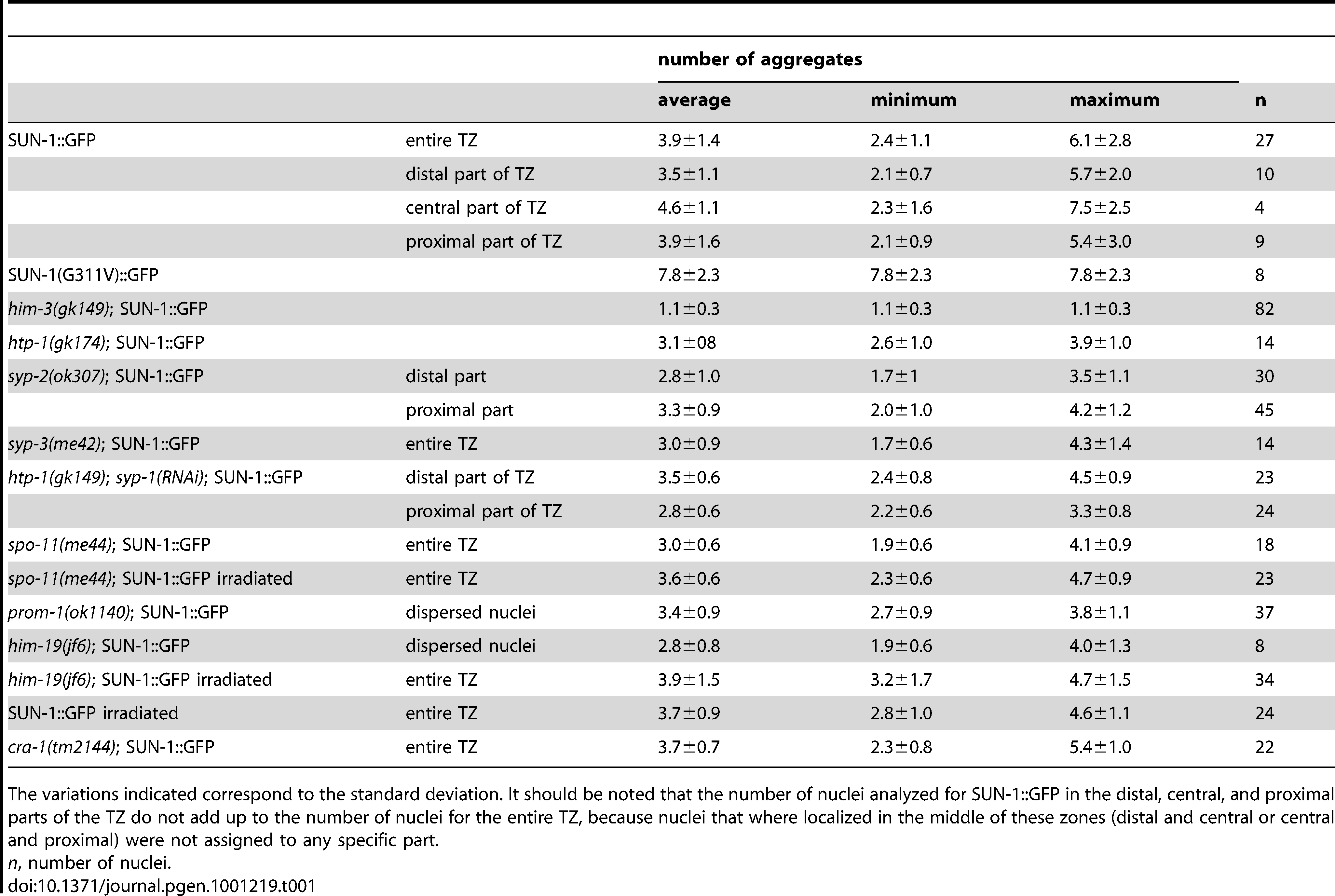 Numbers of aggregates in the region proximal to the mitotic zone for the different genotypes.