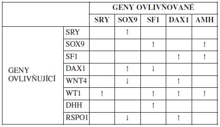 Vzájemné působení genů zapojených do pohlavního vývoje savců, ovlivnění exprese. ↑ - zvýšení exprese; ↓ - snížení exprese [8, 27, 30]