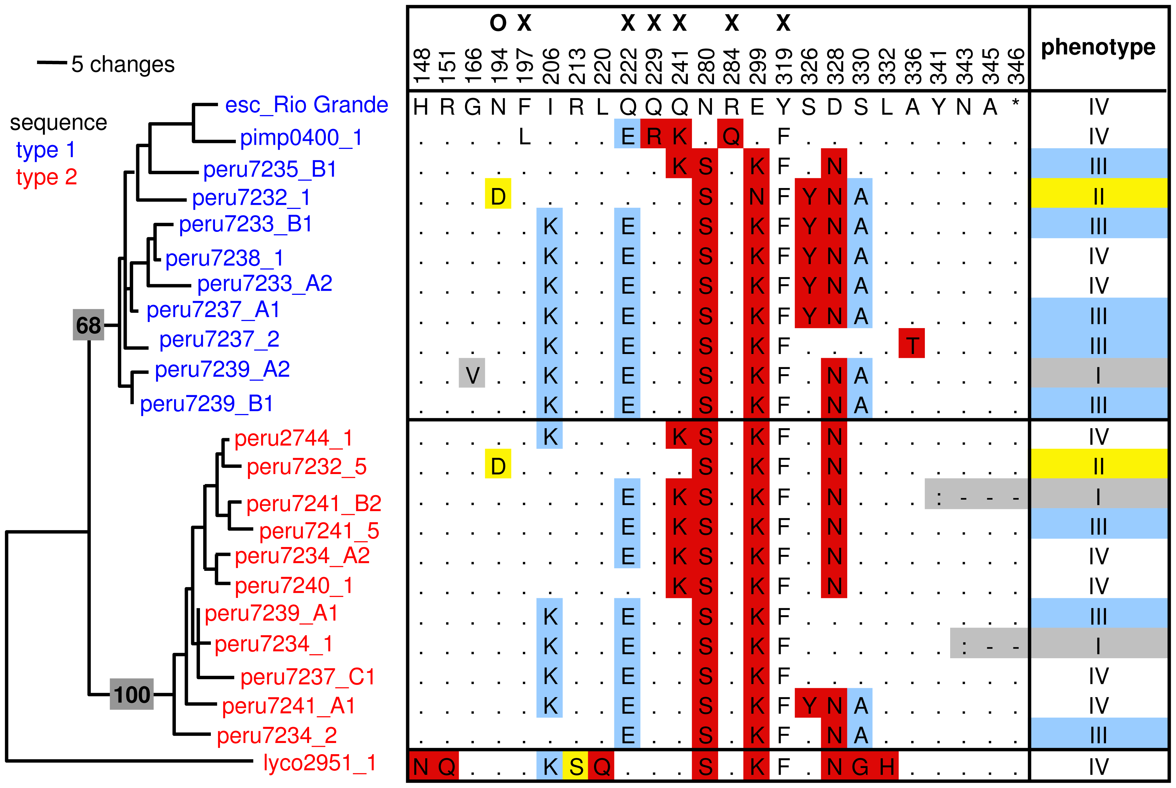Overview of a subset of RCR3 protease domain haplotypes, their phenotype, and position in the <i>RCR3</i> gene tree.