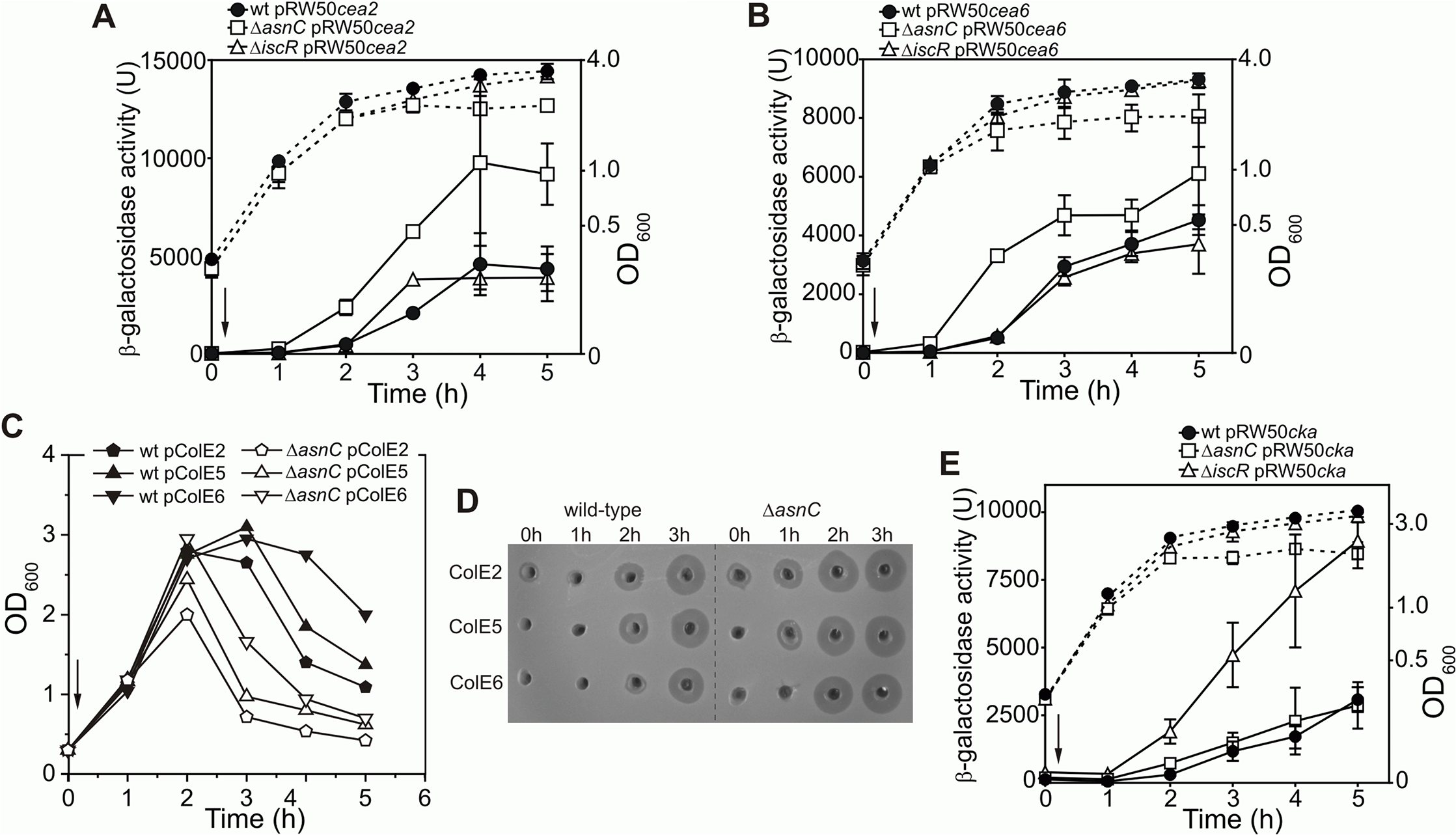 AsnC modulates the temporal induction of different DNA- and RNA-degrading colicins.