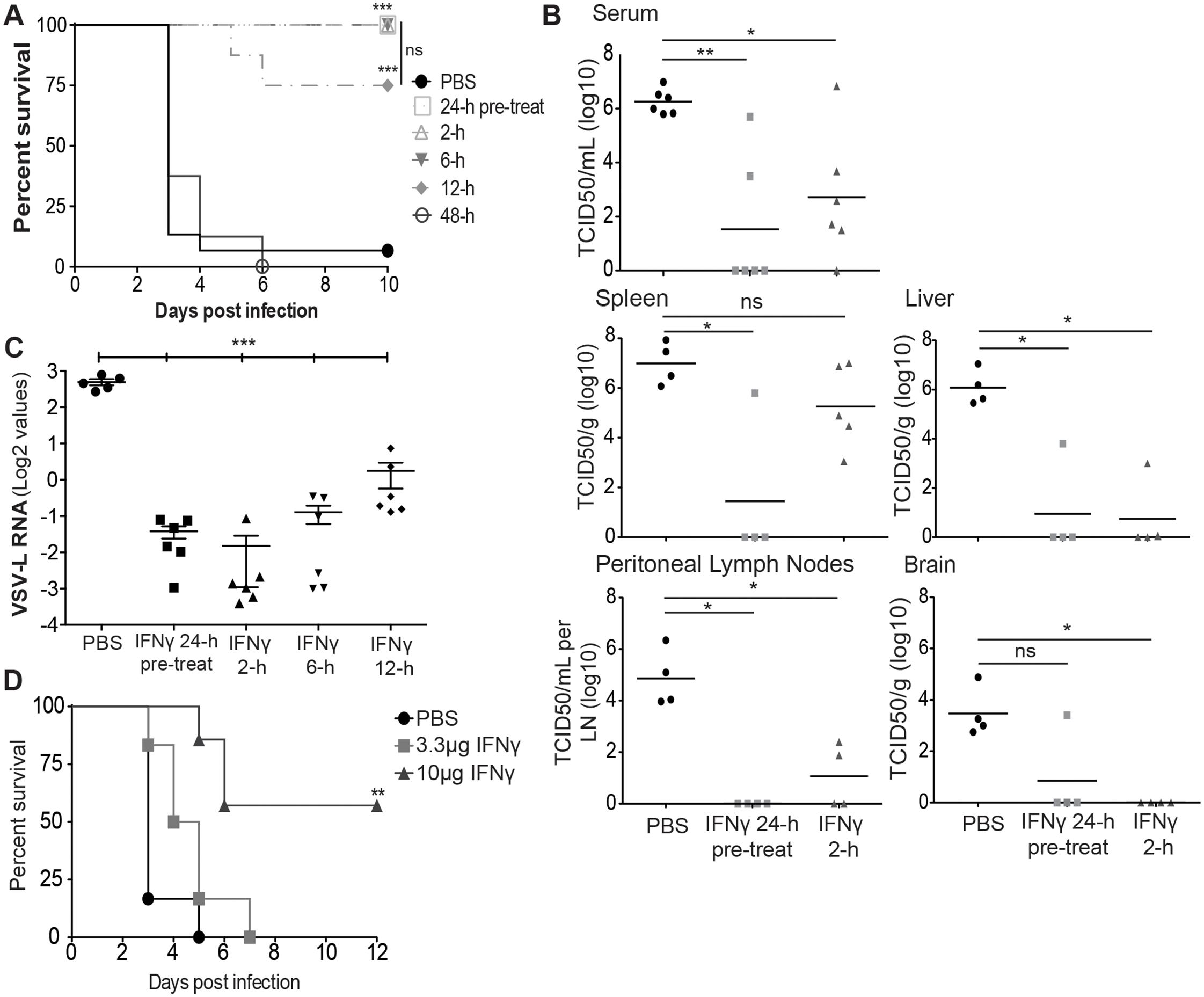 IFNγ reduces EBOV-GP/rVSV morbidity and mortality.