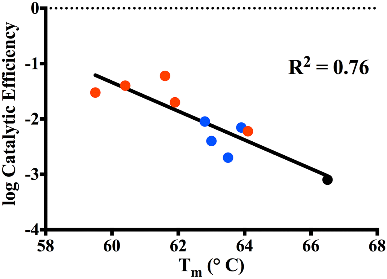 Correlation plot of log catalytic efficiency for ceftazidime (y-axis) as compared to thermal stability of the variants (x-axis).