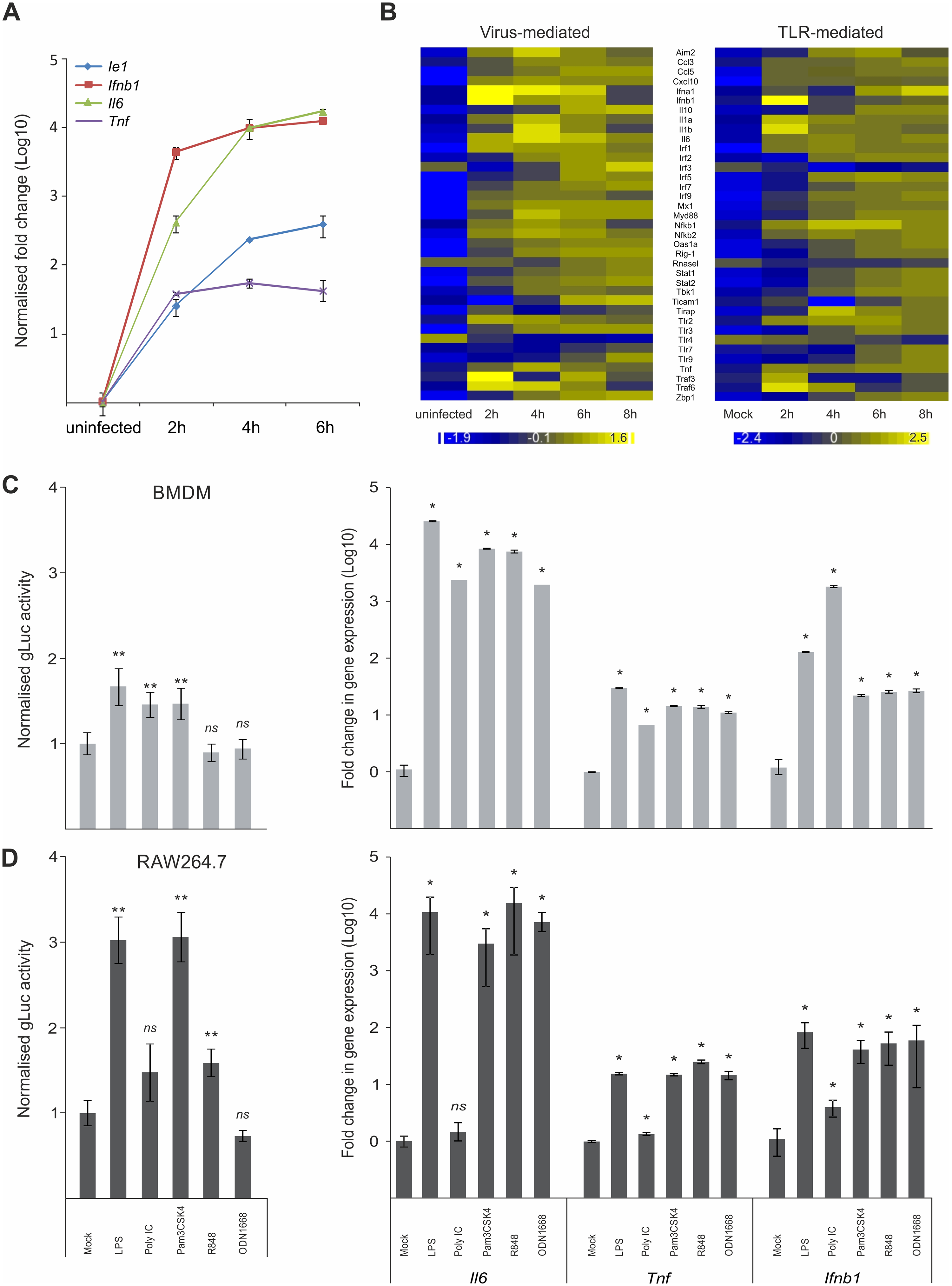 Host innate-immune response genes and viral IE-gene expression have comparable kinetics and are activated by common factors.