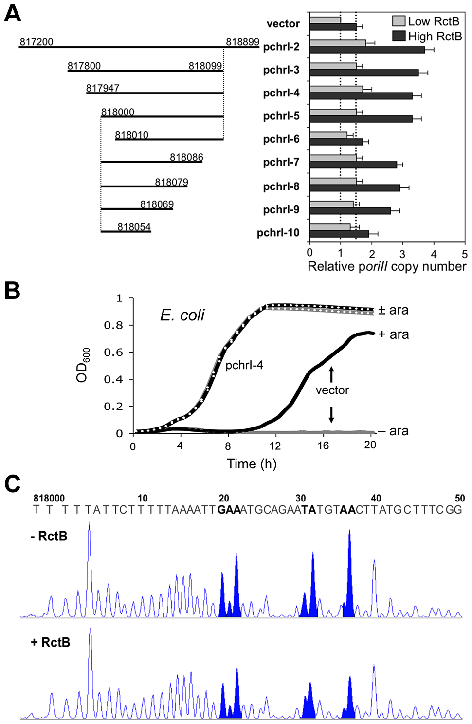 The newly identified chrI site enhances mini-chrII replication, improves cell growth and binds purified RctB.