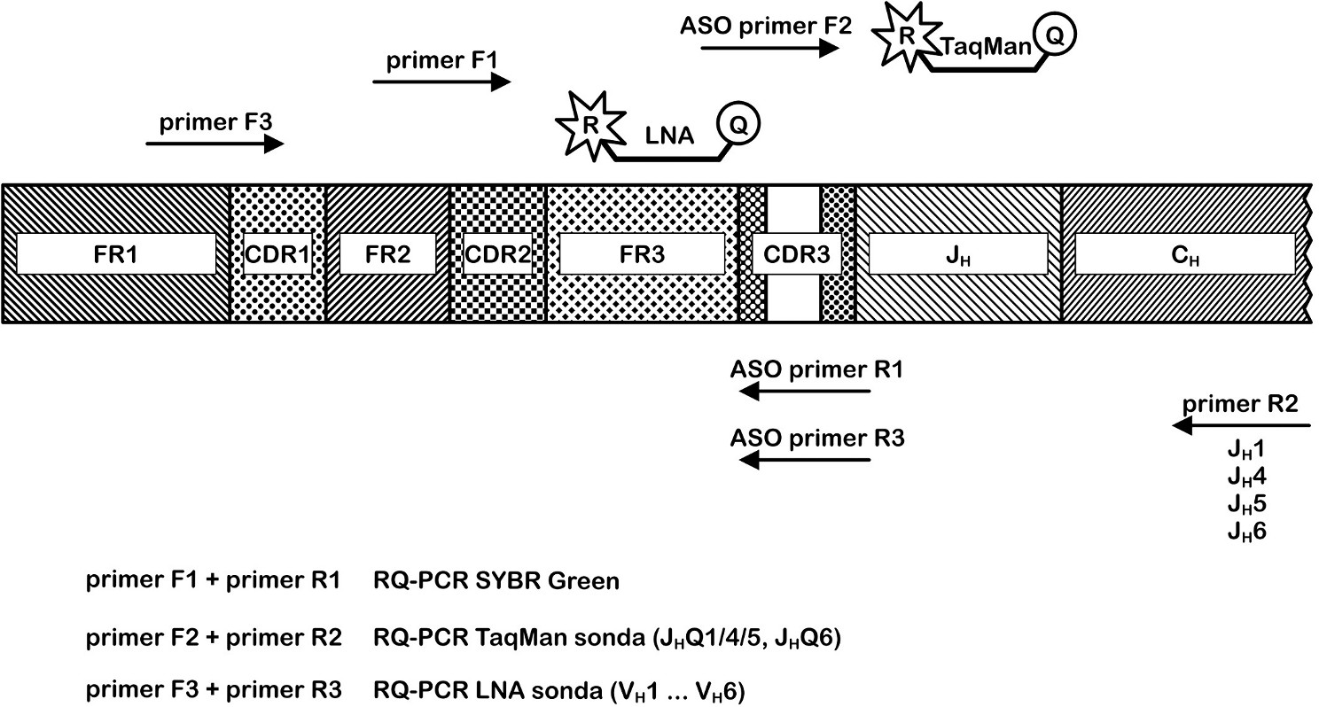 Porovnání přístupů RQ-PCR pro IgH řetězec. Metoda SYBRGreen využívá pro pacienta specifický reverzní primer R1 a forward primer F1; Metoda ASO RQ-PCR používá kombinaci jednoho ze čtyř reverzních primerů R2, pro pacienta specifického primeru F2 a jedné ze dvou konsensuálních TaqMan sond; Metoda ASO RQ-PCR s LNA TaqMan sondami kombinuje primer F3, pro pacienta specifický reverzní primer R3 a jednu ze šesti LNA TaqMan sond.