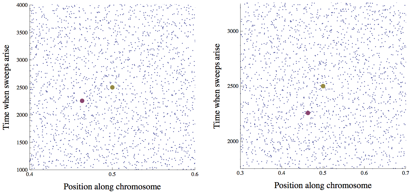 The distribution of sweeps in time across the genome.